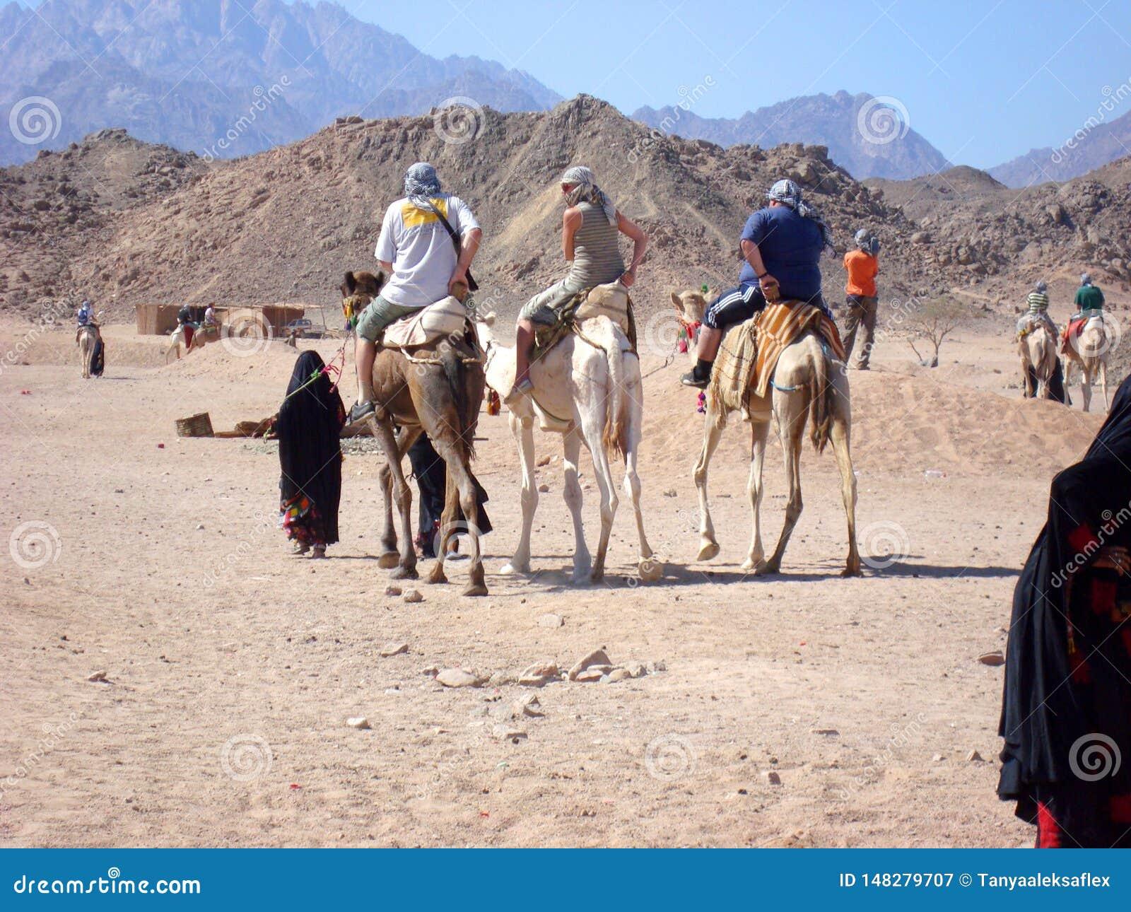 Τρεις τουρίστες οδηγούν στις καμήλες που συνοδεύονται από έναν οδηγό