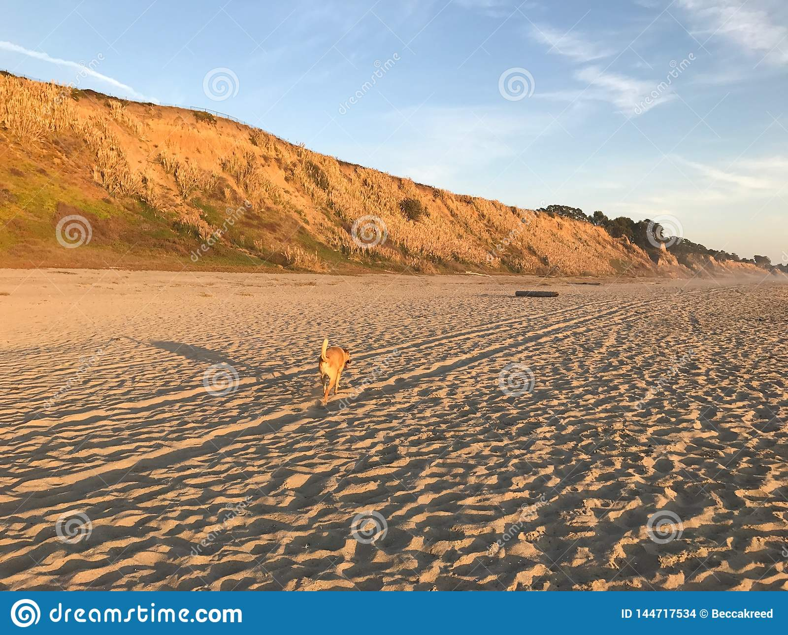 Τρεξίματα σκυλιών στην κενή παραλία