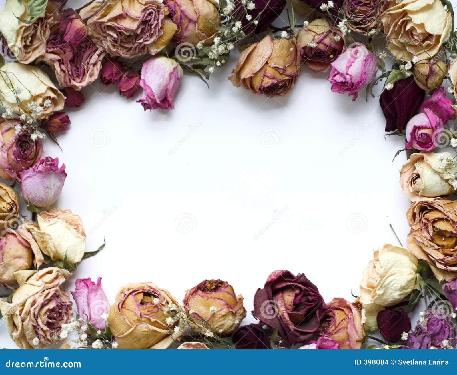 τριαντάφυλλα πλαισίων