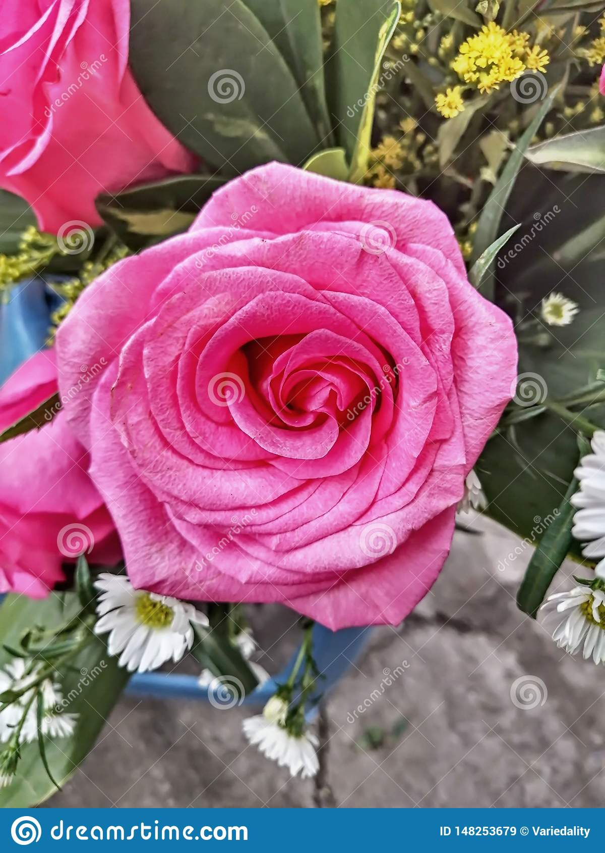 Τριαντάφυλλα του ισημερινού