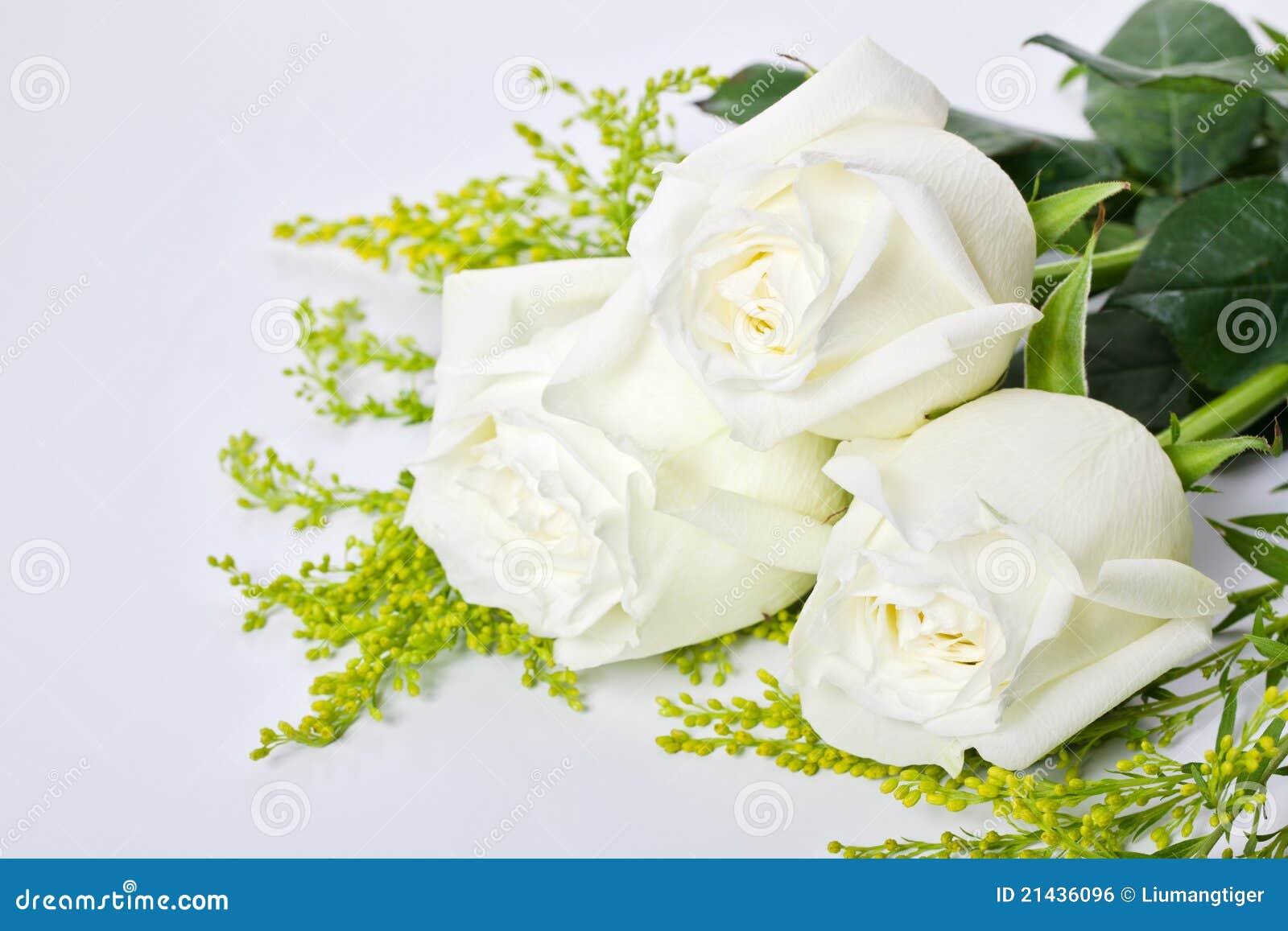 τριαντάφυλλα τρία λευκό