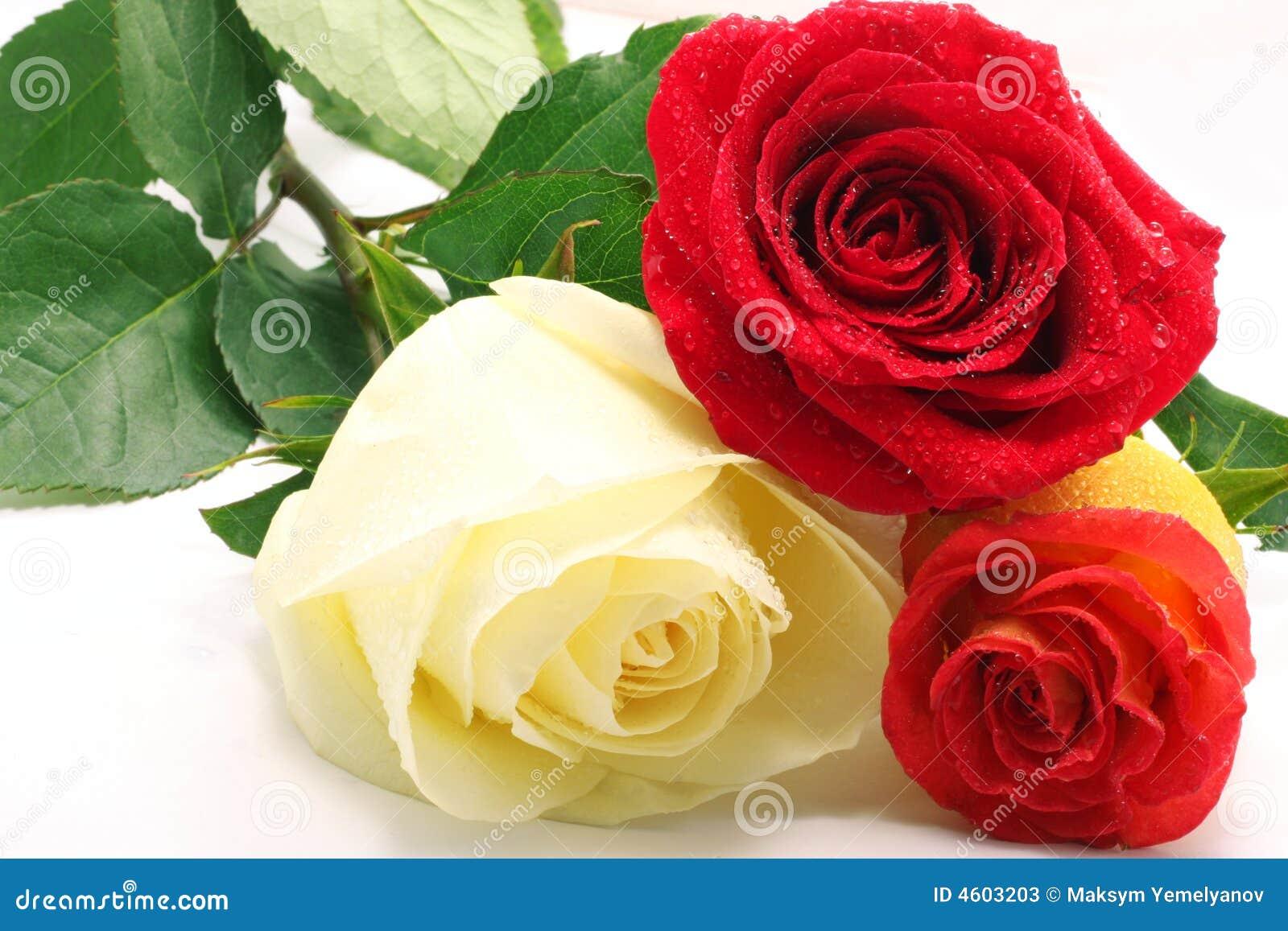 τριαντάφυλλα τρία
