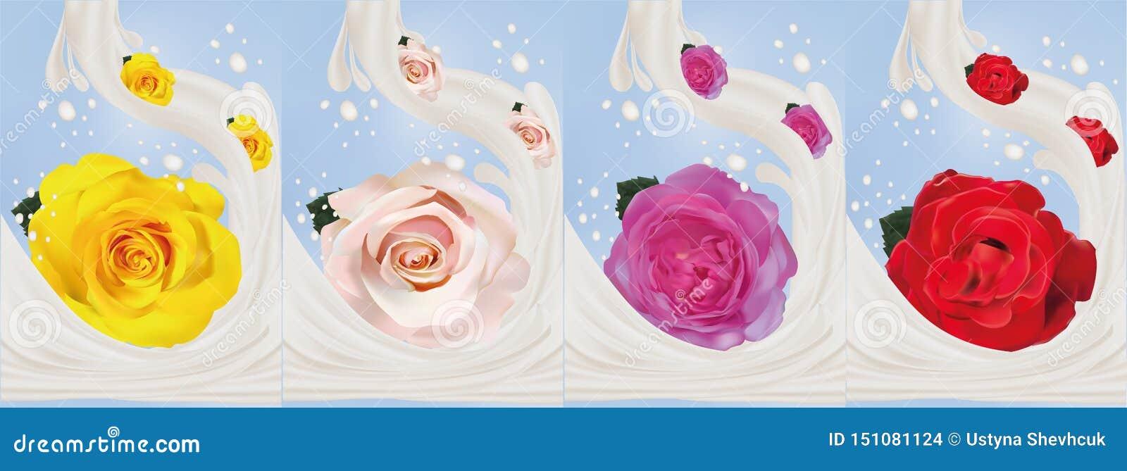 τρισδιάστατος ρεαλιστικός αυξήθηκε με την κινηματογράφηση σε πρώτο πλάνο παφλασμών γάλακτος Όμορφα τριαντάφυλλα κίτρινα, κόκκινα,