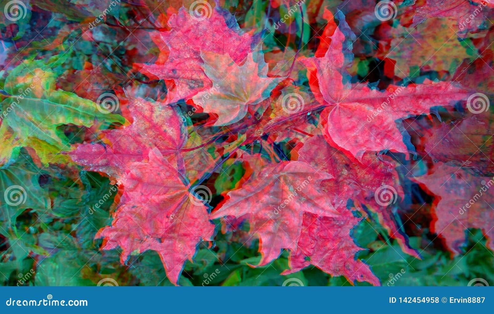 τρισδιάστατο ανάγλυφο Κόκκινα φύλλα σφενδάμου