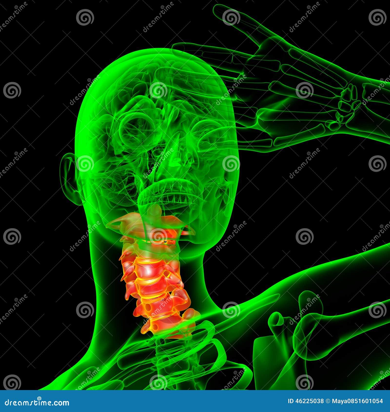 τρισδιάστατος δώστε την ιατρική απεικόνιση της αυχενικής σπονδυλικής στήλης