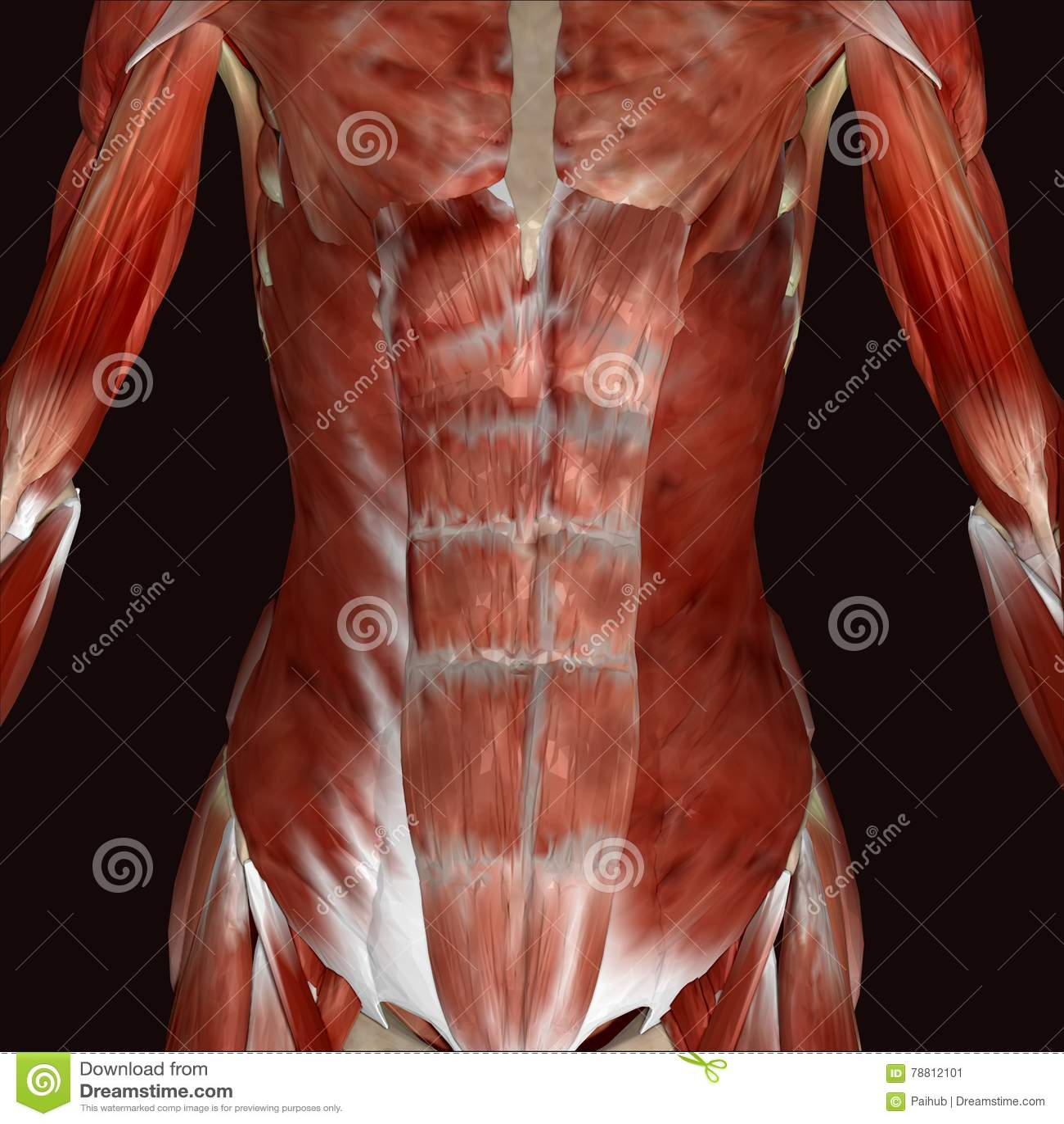 τρισδιάστατο θηλυκό ανθρώπινο σώμα απεικόνισης