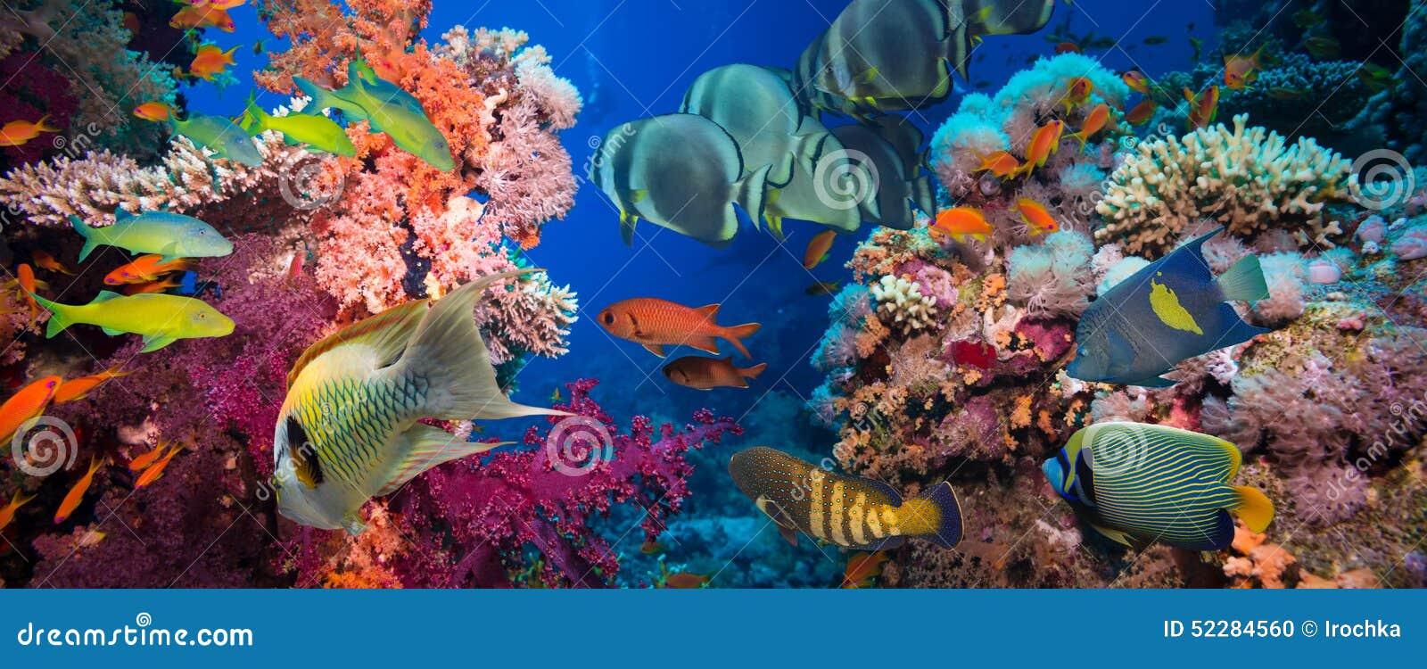 Τροπικά ψάρια και κοραλλιογενής ύφαλος