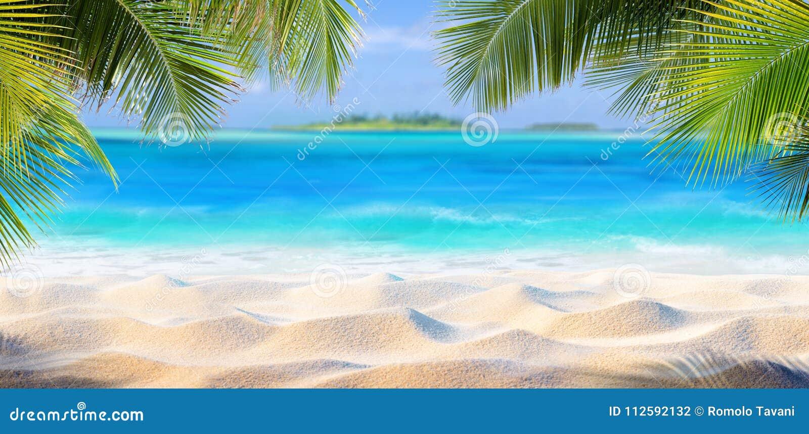 Τροπική άμμος με τα φύλλα φοινικών