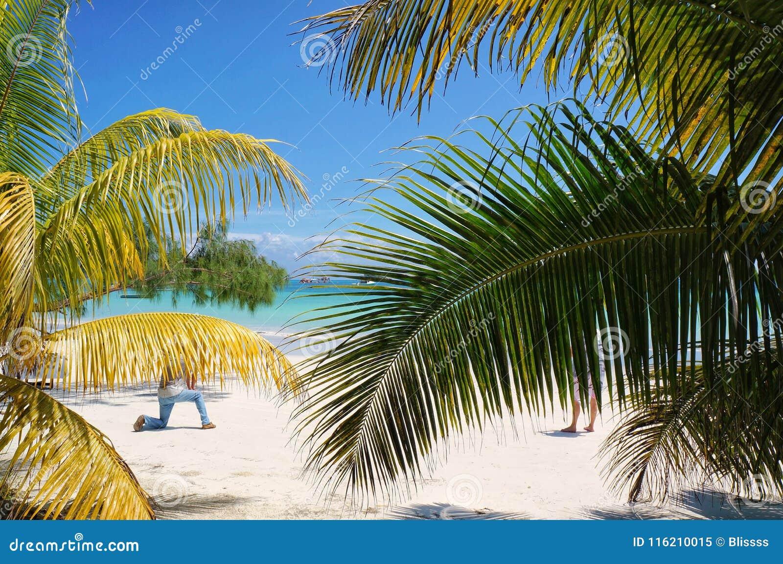 Τροπική παραλία με τους φοίνικες και την άσπρη άμμο Εξωτικός προορισμός παραθαλάσσιων θερέτρων και ταξιδιού για τις διακοπές και