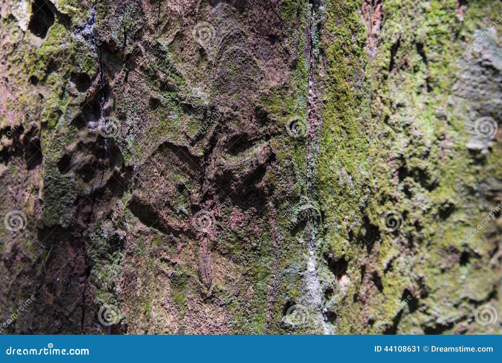 Τροπική σύσταση δασικών δέντρων