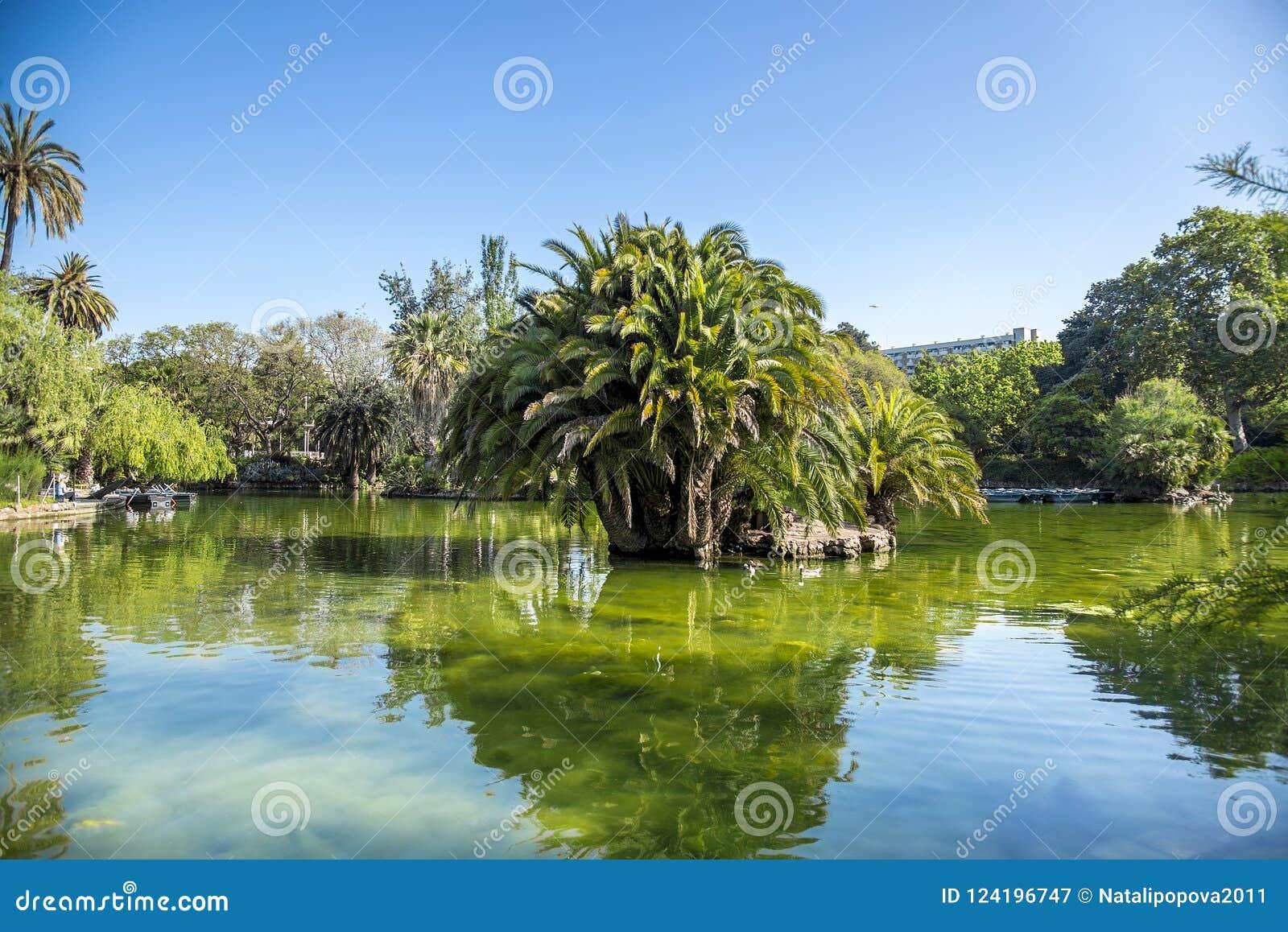 Τροπικοί κήπος, λίμνη και φοίνικας στη Βαρκελώνη, Ισπανία