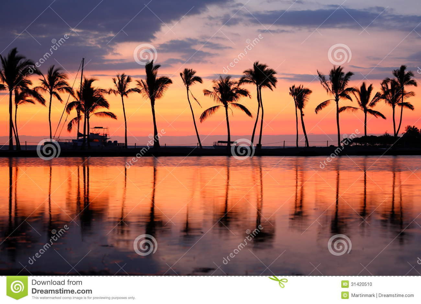 Τροπικοί φοίνικες ηλιοβασιλέματος παραλιών παραδείσου