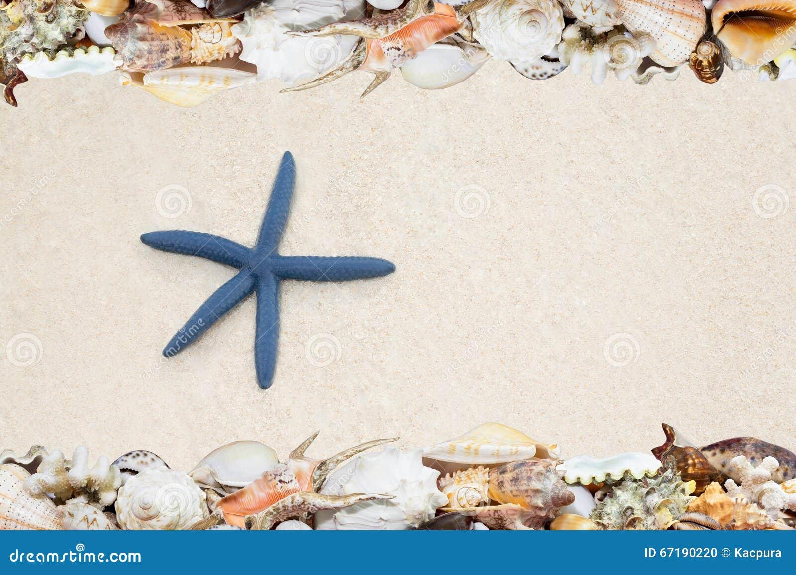Τροπικός αστερίας κοχυλιών ANS σε μια παραλία