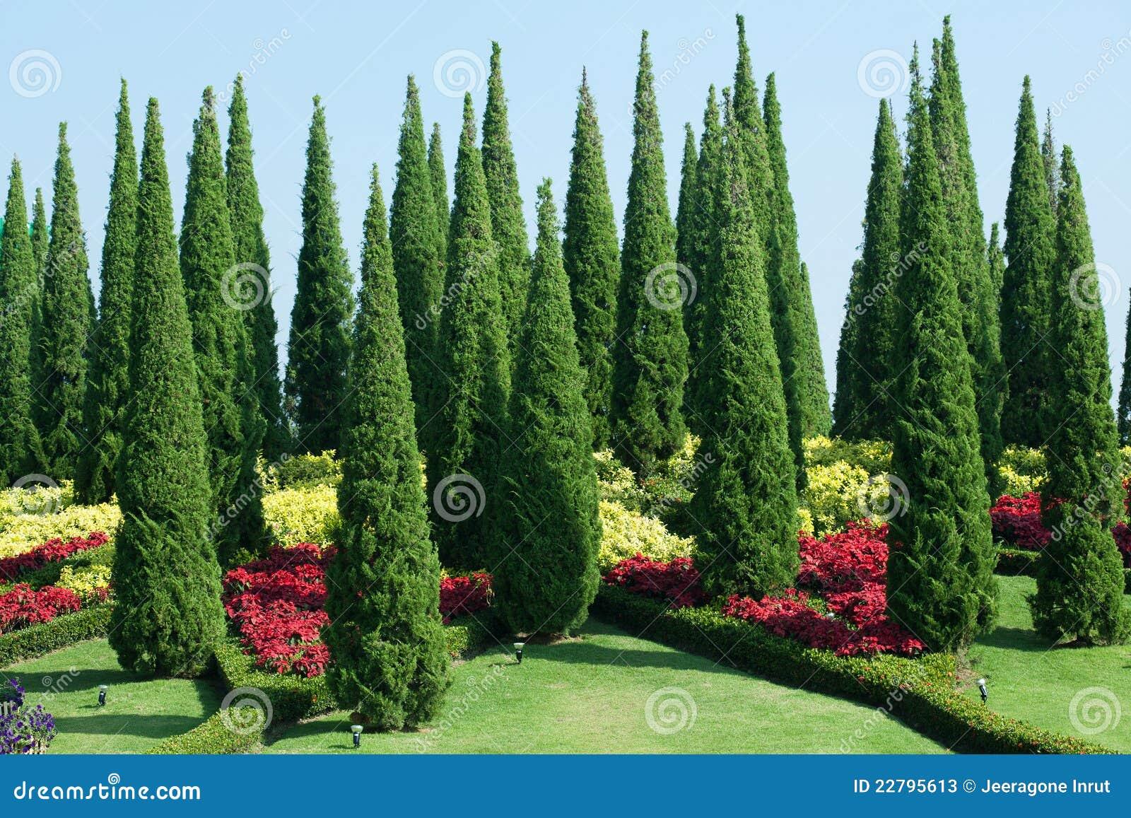 Τροπικός κήπος