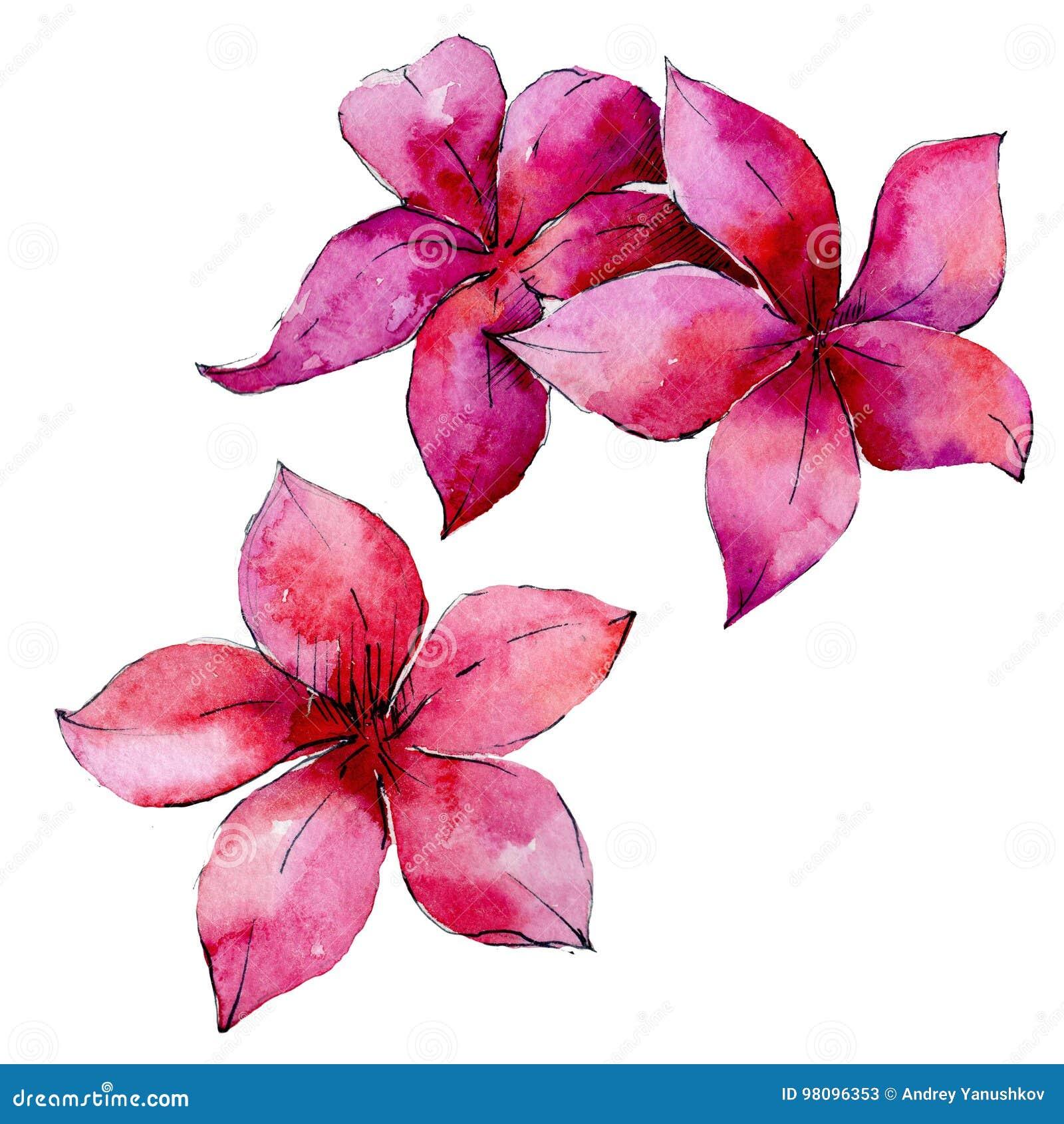 Τροπικός φοίνικας φύλλων της Χαβάης σε ένα ύφος watercolor που απομονώνεται
