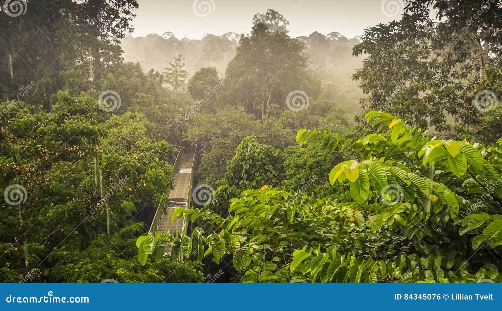Τροπικό δάσος wiew από τον πύργο περιπάτων θόλων σε Sepilok, Μπόρνεο