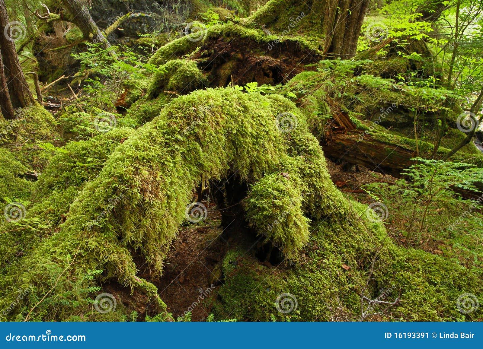 τροπικό δάσος συγκρατημέ&n