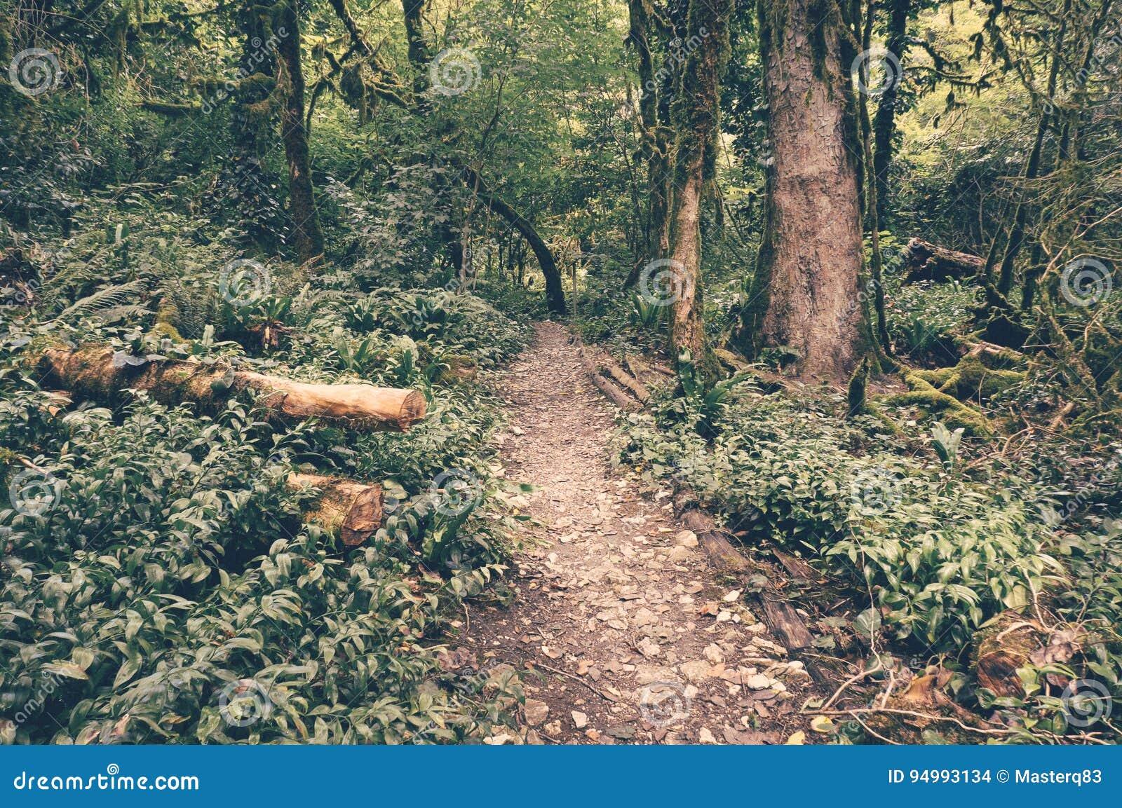 Τροπικό εκλεκτής ποιότητας ύφος τροπικών δασών