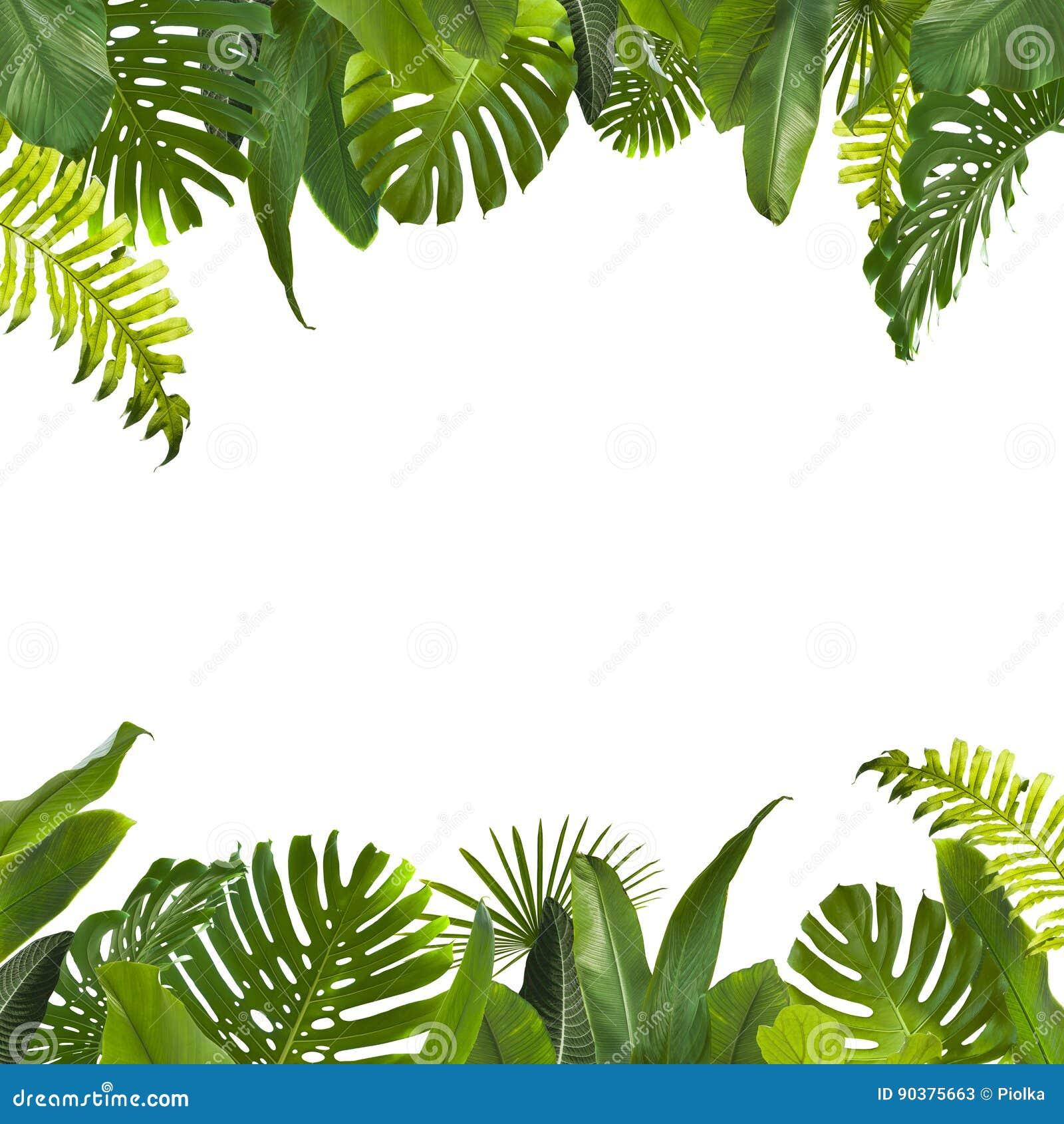 Τροπικό υπόβαθρο φύλλων ζουγκλών