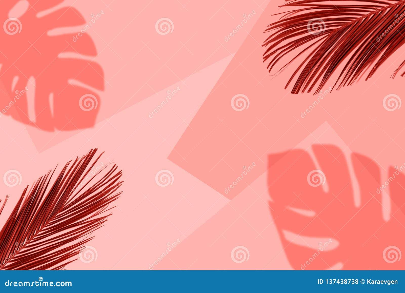 Τροπικό υπόβαθρο χρώματος κοραλλιών με τα εξωτικά τροπικά φύλλα φοινικών Ελάχιστη θερινή έννοια Επίπεδος βάλτε
