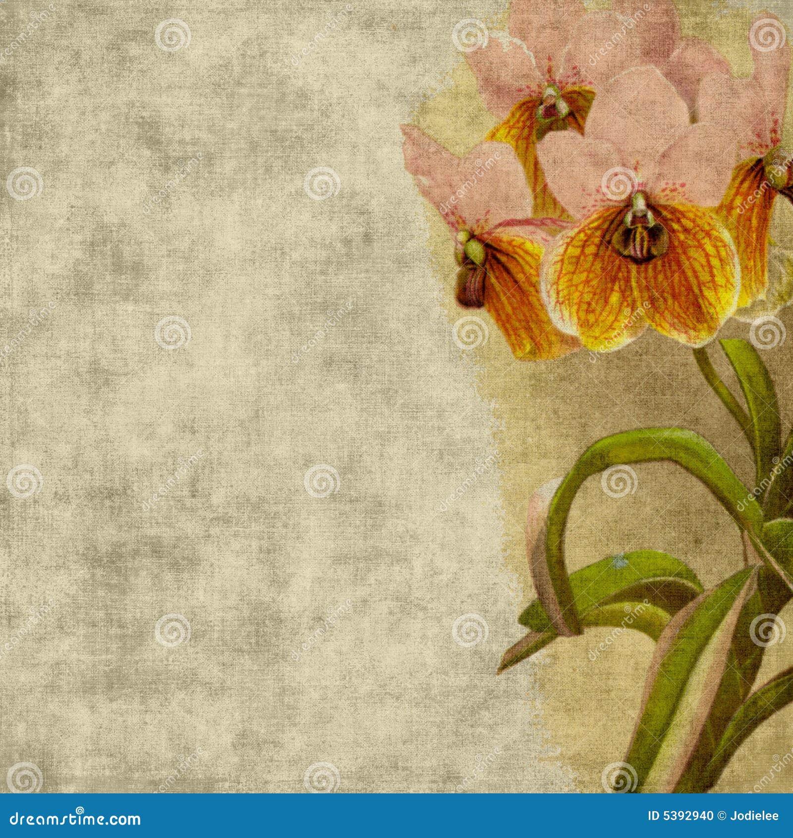 τρύγος λευκώματος αποκομμάτων λουλουδιών ανασκόπησης