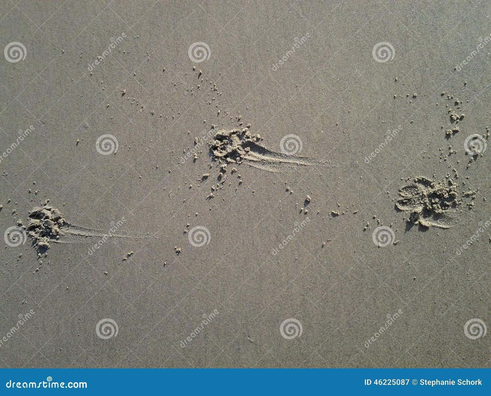 Τυπωμένη πόδι άμμος