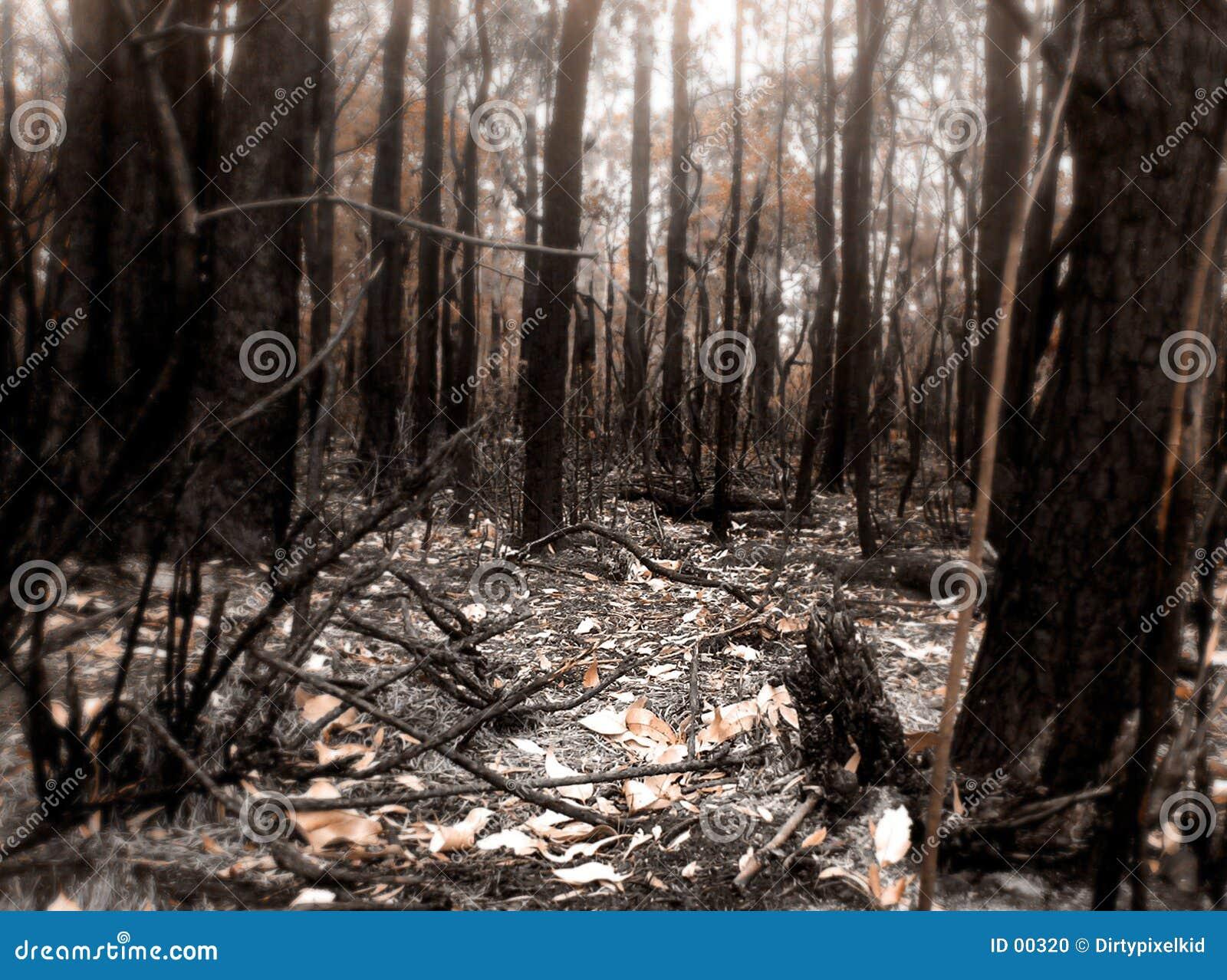 τόπος της πυρκαγιάς θάμνων