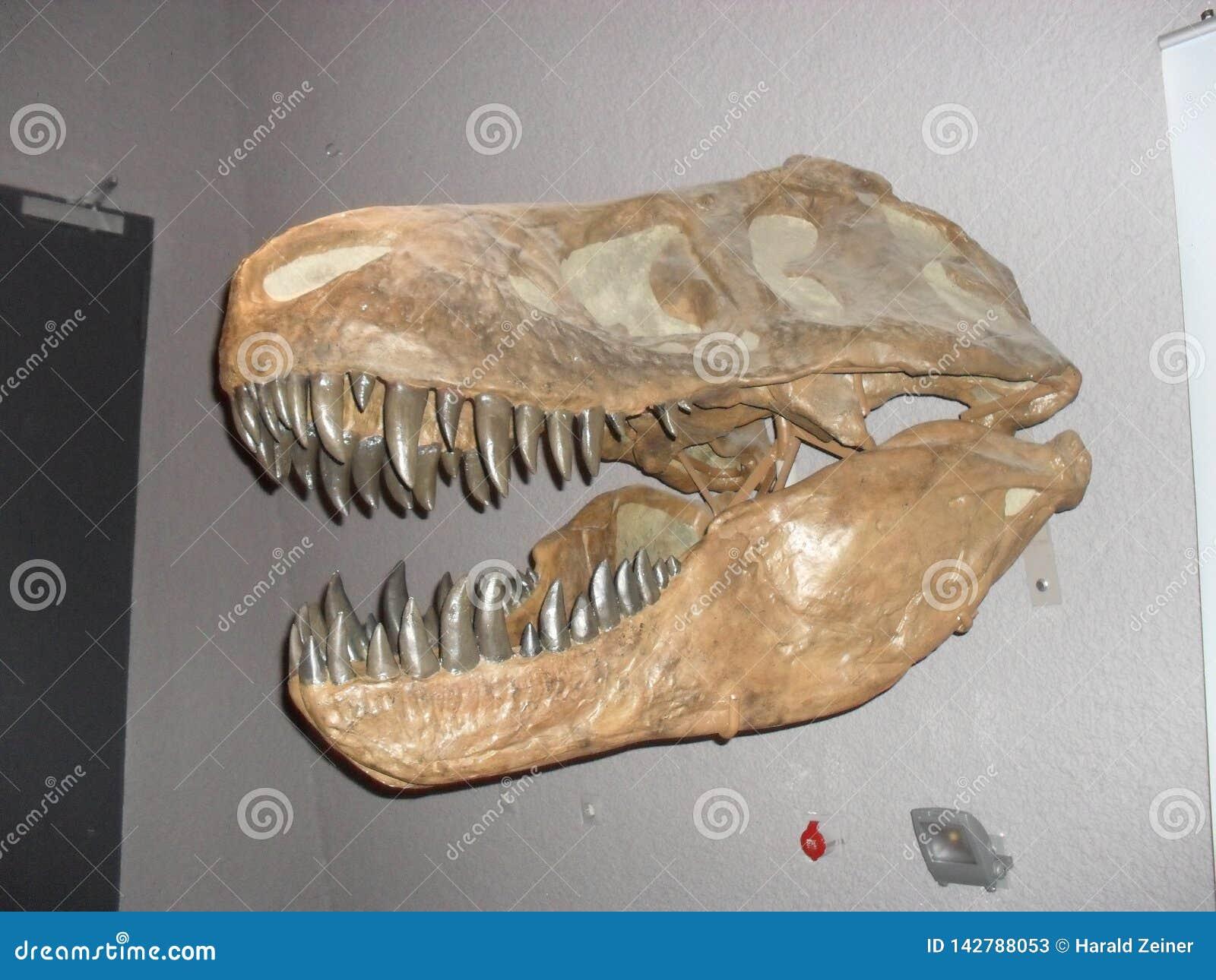 Τ -τ-rex