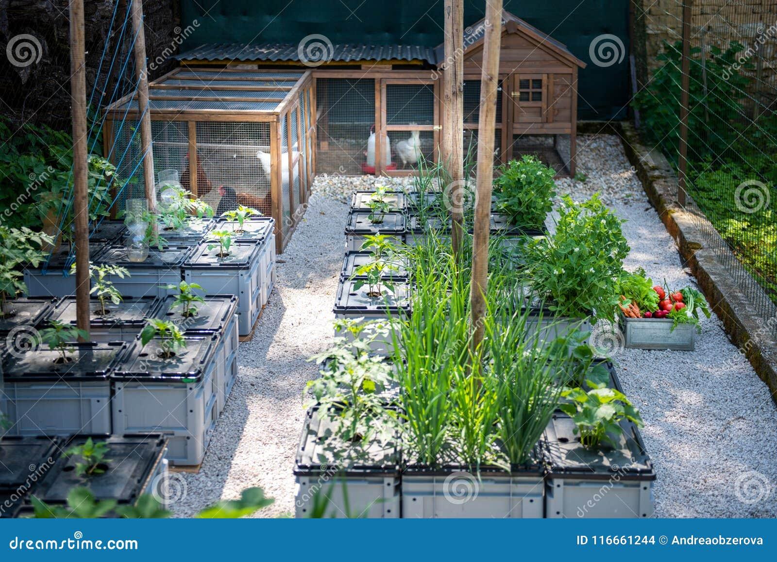 Υγιής οργανικός τρόπος ζωής κατανάλωσης και ικανότητας υποστήριξης Ελεύθερες ωοτόκες όρνιθες αυγών σειράς και homegrown λαχανικά