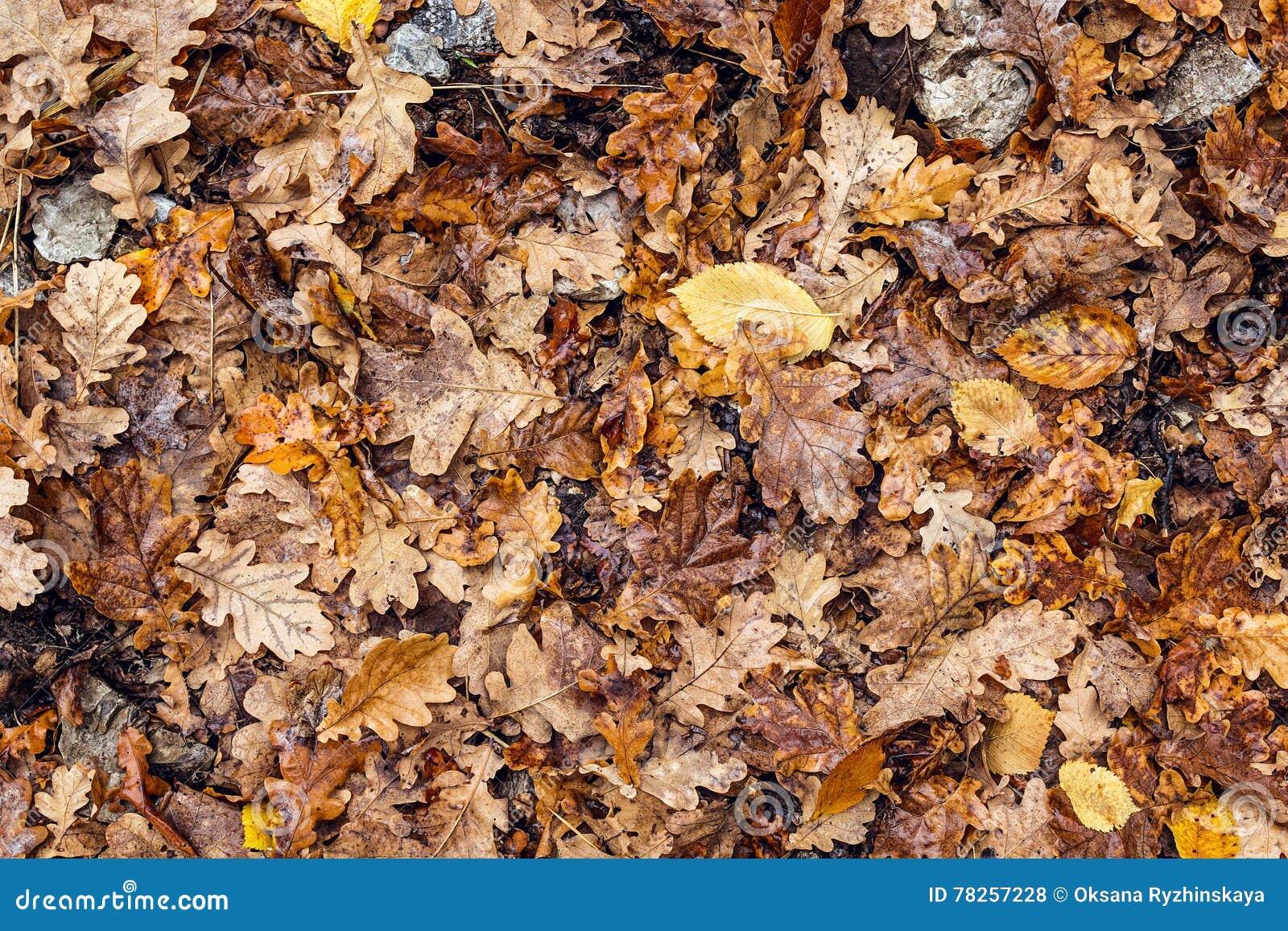 Υγρά πεσμένα δρύινα φύλλα ψηφιακό φύλλο πτώσης ανασκόπησης φθινοπώρου τέχνης