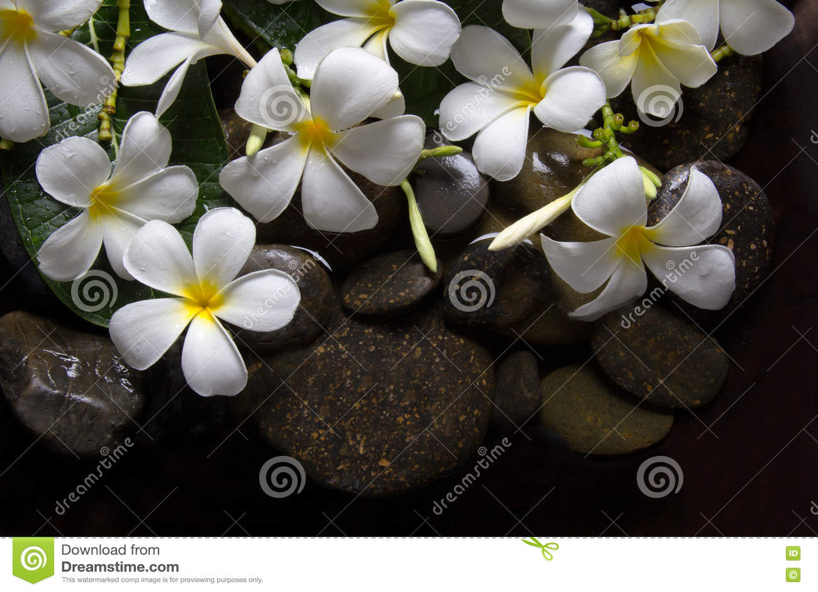 Υγρότοποι Plumeria στο ξύλο και την πέτρα