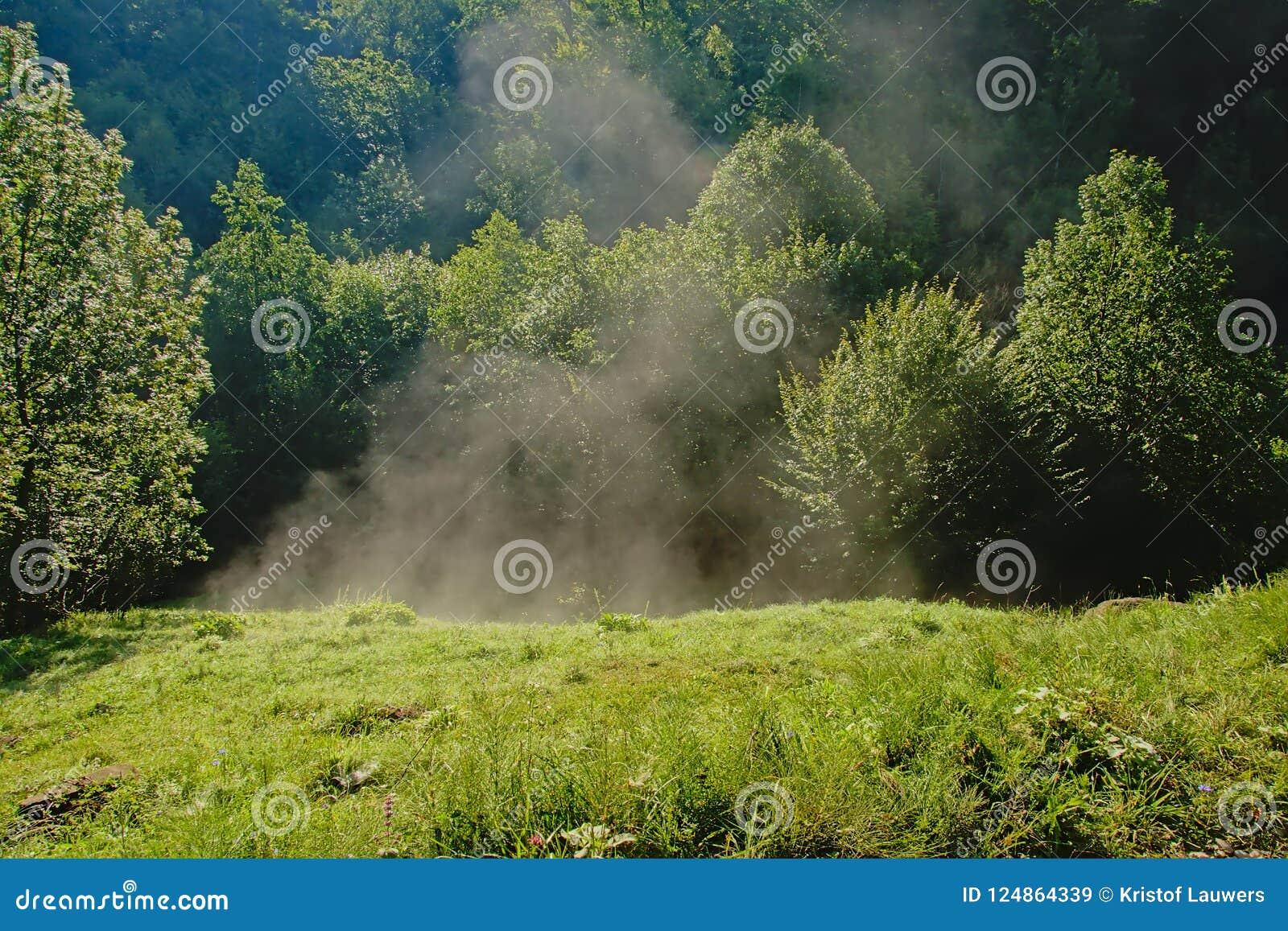 Υδρονέφωση πρωινού που αυξάνεται κάτω από τις πρώτες ακτίνες ήλιων σε ένα λιβάδι στη ρουμανική επαρχία