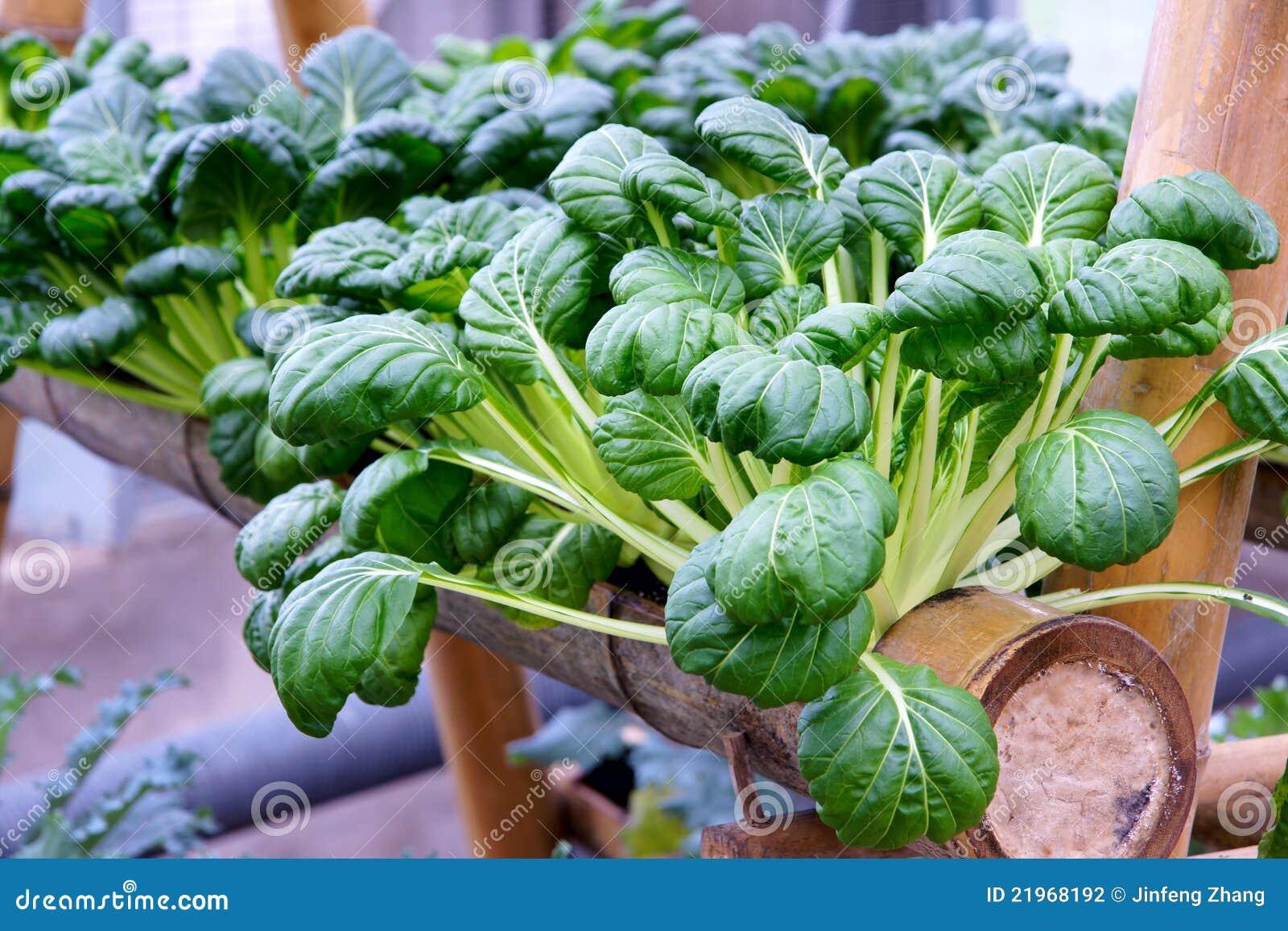υδροπονικά λαχανικά