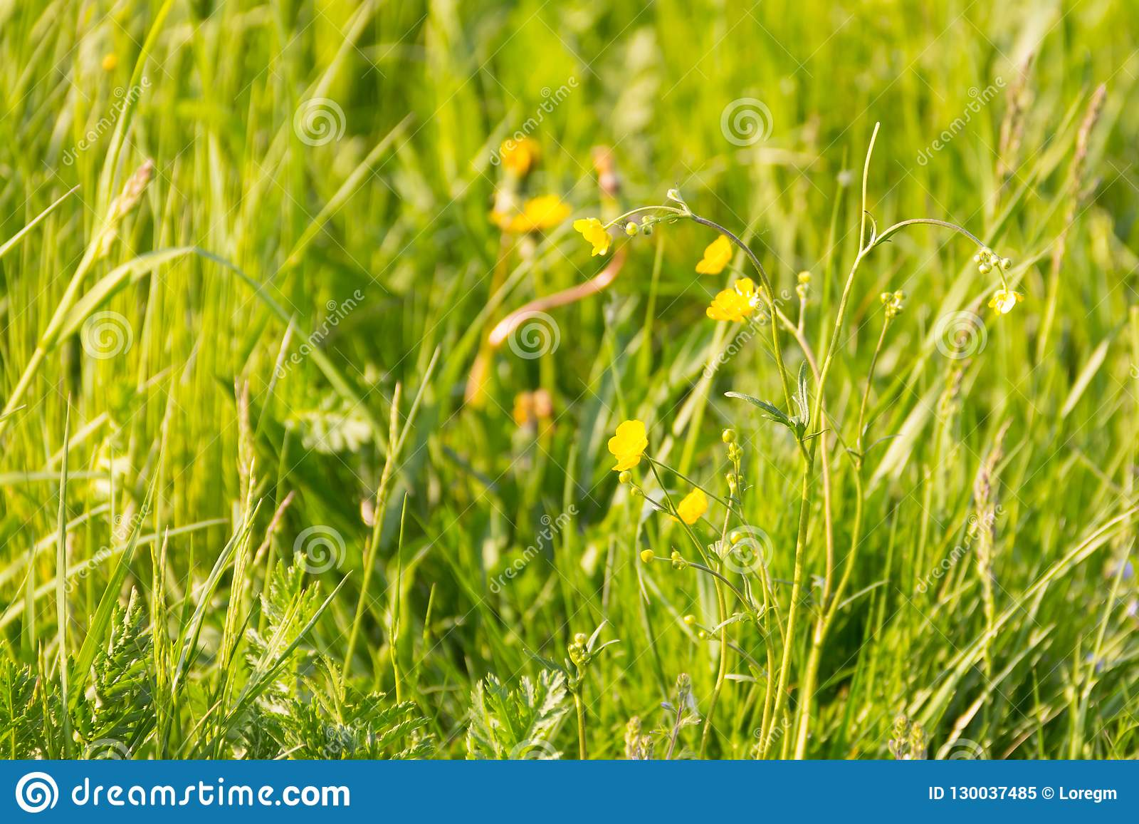 Υποβάθρου ηλιόλουστη πράσινη τομέων κίτρινη λουλουδιών φωτεινή φωτός του ήλιου χαλάρωση υπολοίπου eco βάσεων φυτική