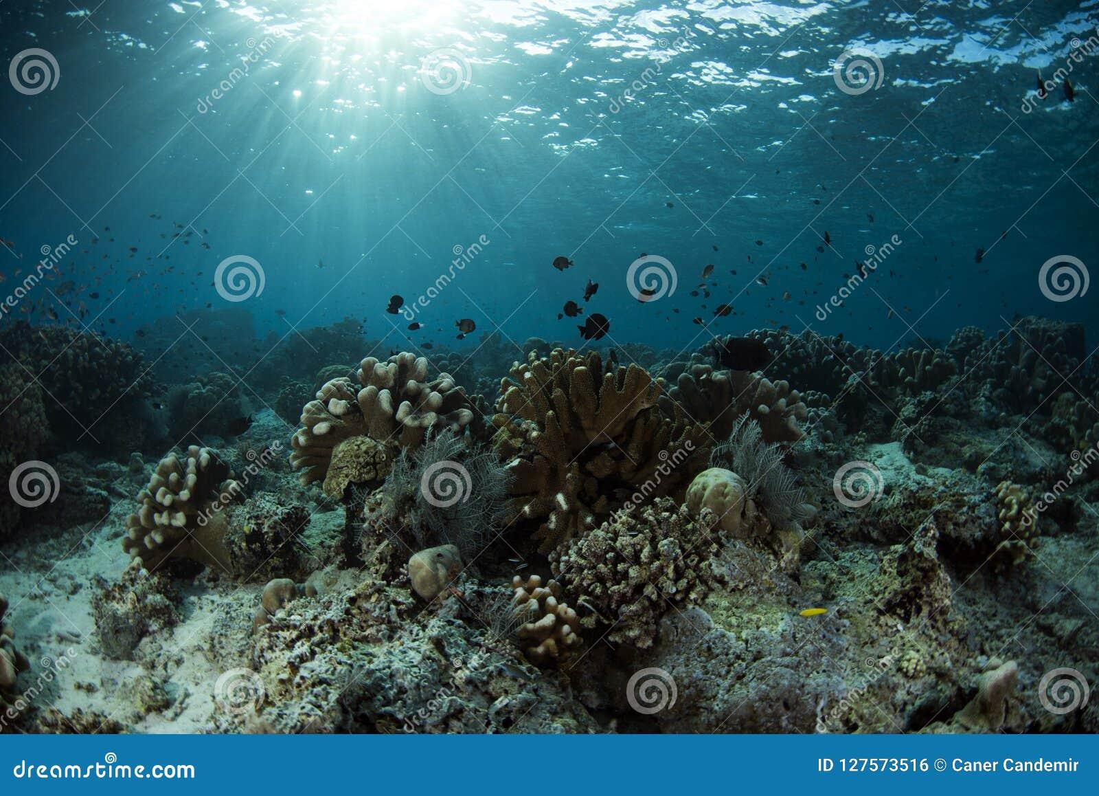 Υποβρύχια ζωή του νησιού Sipadan