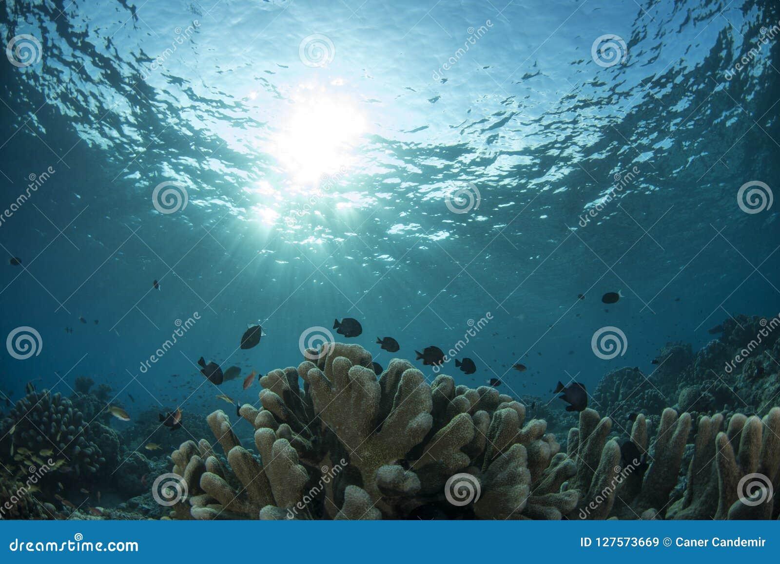 Υποβρύχια σκηνή ζωής του νησιού Sipadan