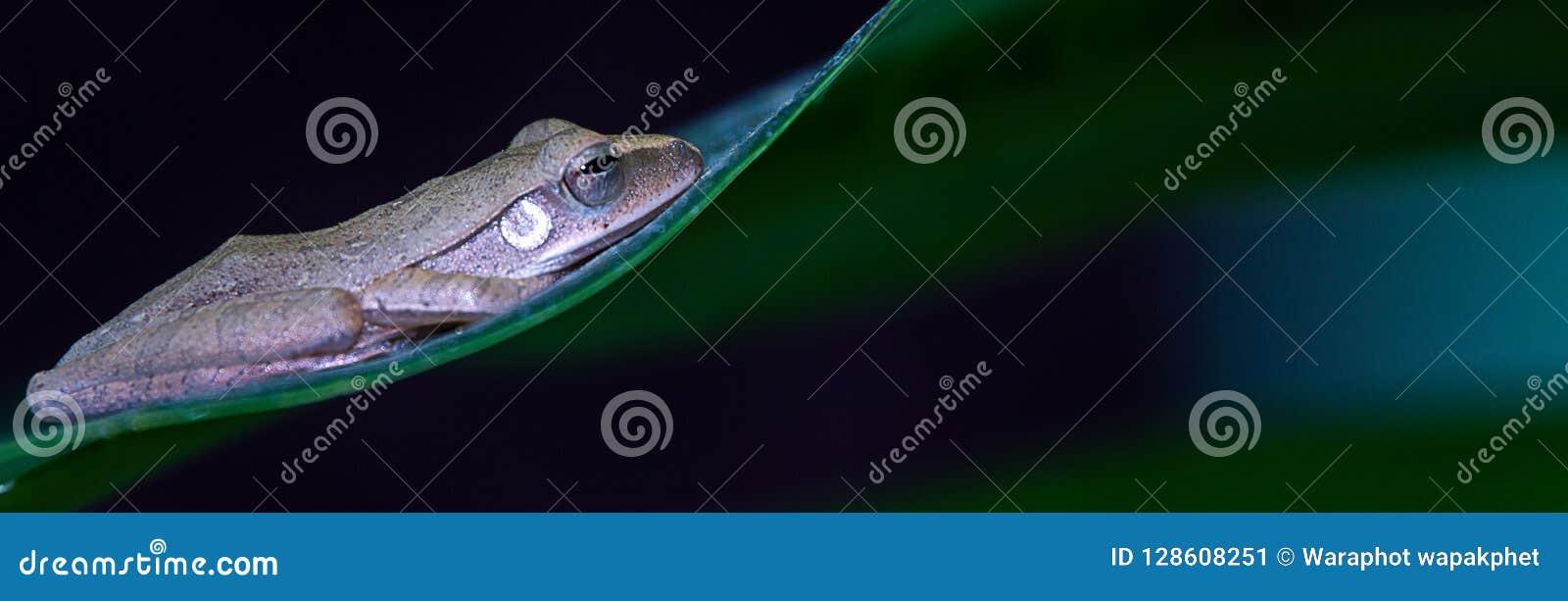υπόβαθρο εμβλημάτων, βάτραχος στο φύλλο