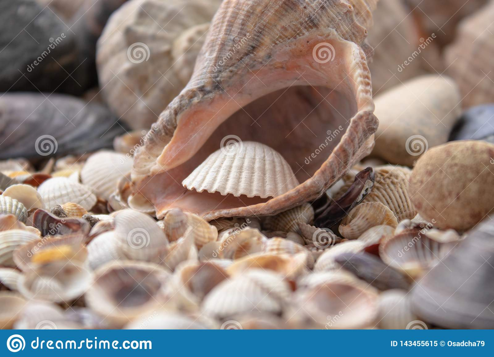 Υπόβαθρο θέματος θάλασσας με διεσπαρμένη την κοχύλια κινηματογράφηση σε πρώτο πλάνο Συλλογή της Shell θάλασσας