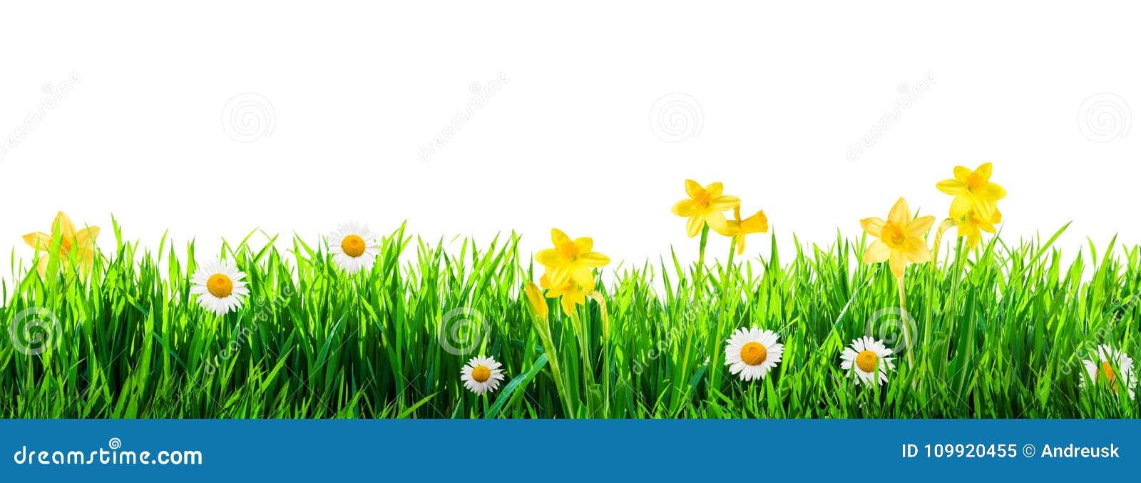 Υπόβαθρο λουλουδιών χλόης και άνοιξη