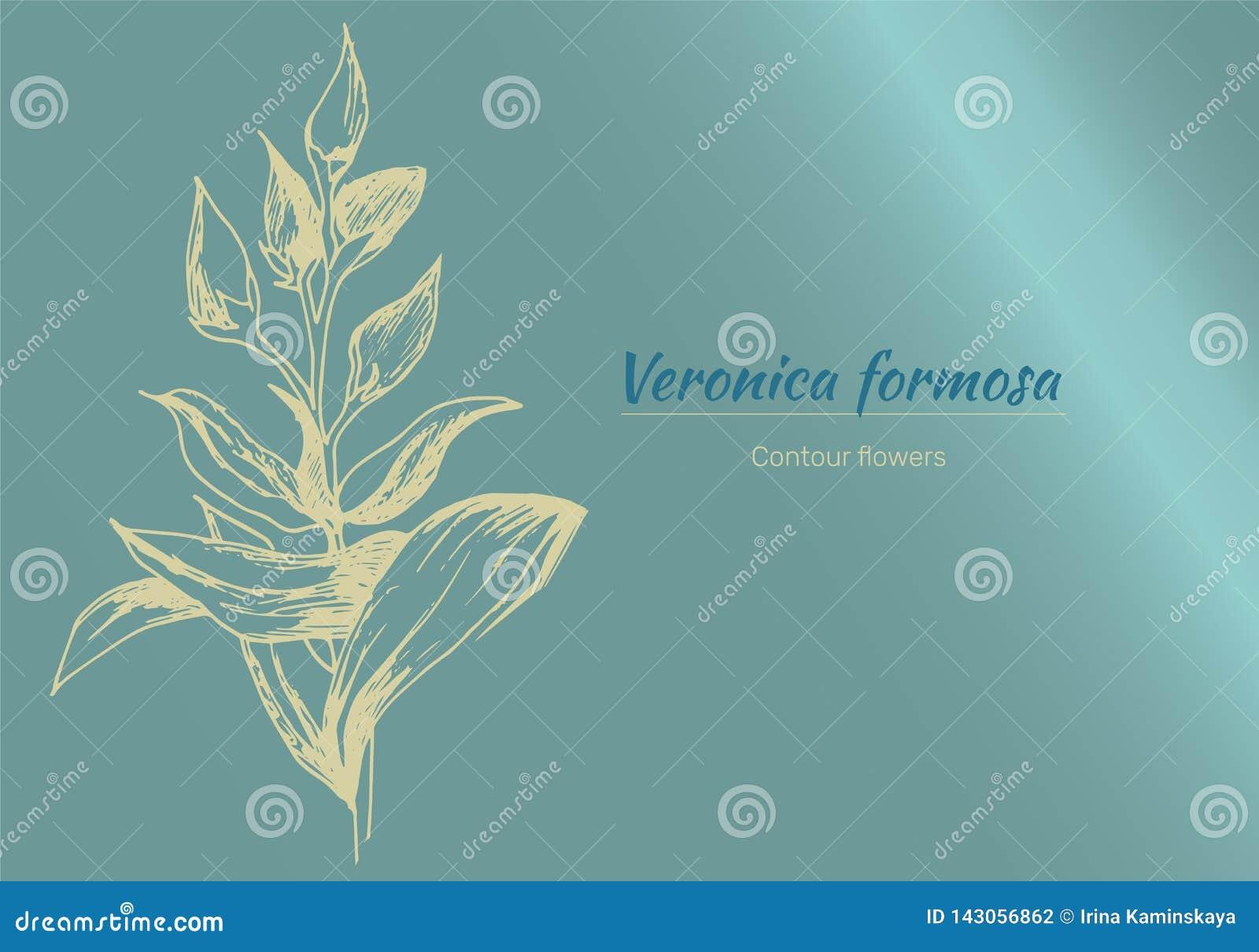 Υπόβαθρο με τα λεπτά χρωματισμένα λουλούδια Κάρτα, πλαίσιο κειμένων Λουλούδια περιγράμματος άνοιξη, watercolor r