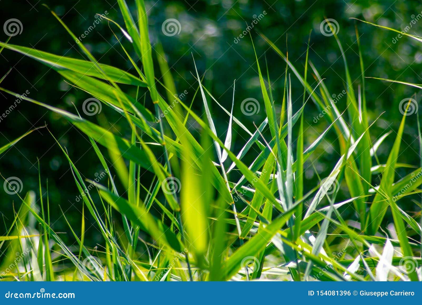 Υπόβαθρο που δημιουργείται ζωηρόχρωμο από τις λεπτομέρειες βλάστησης των εγκαταστάσεων το κυρίαρχο πράσινο χρώμα στη φύση λόγω τη