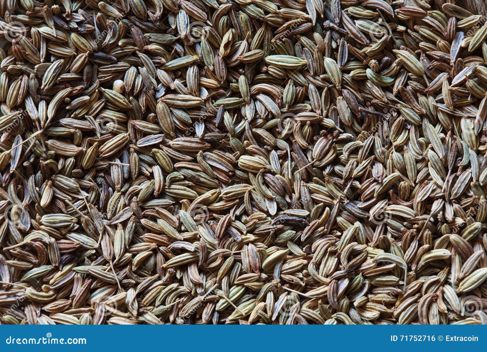 Υπόβαθρο σπόρων μαράθου