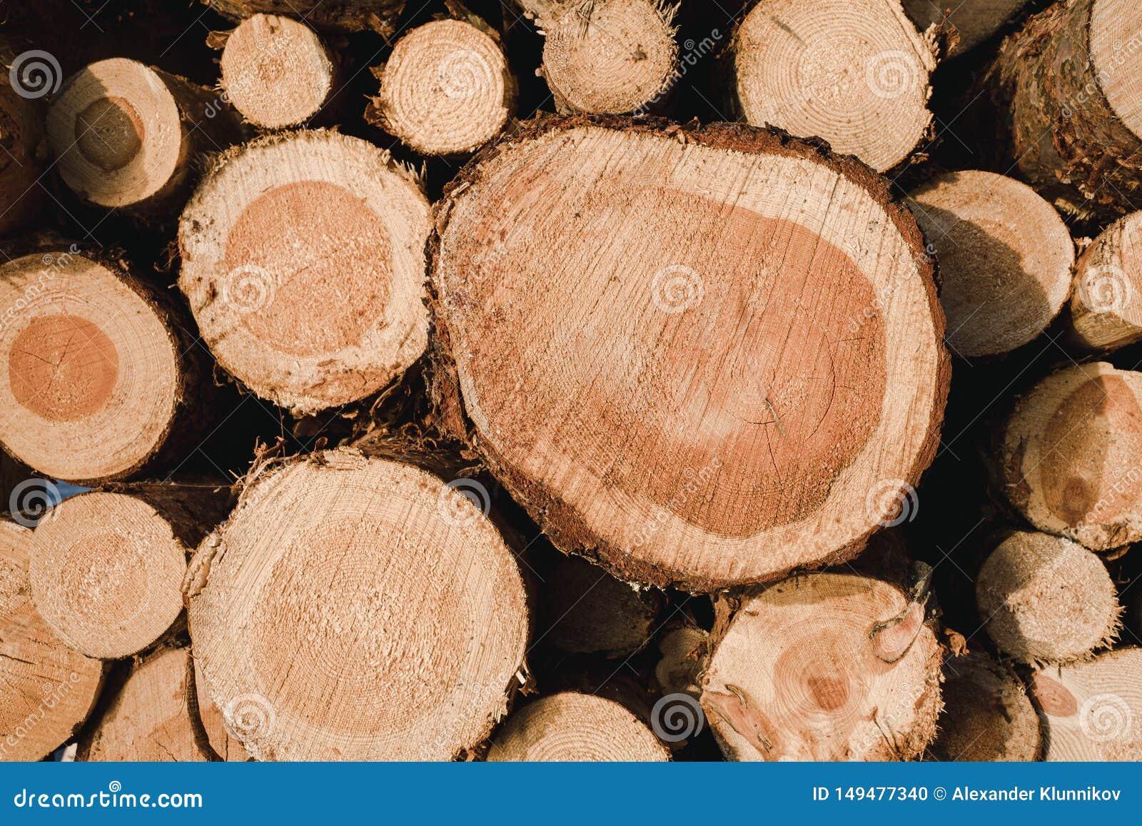 Υπόβαθρο της σύστασης πολτού ξύλου E