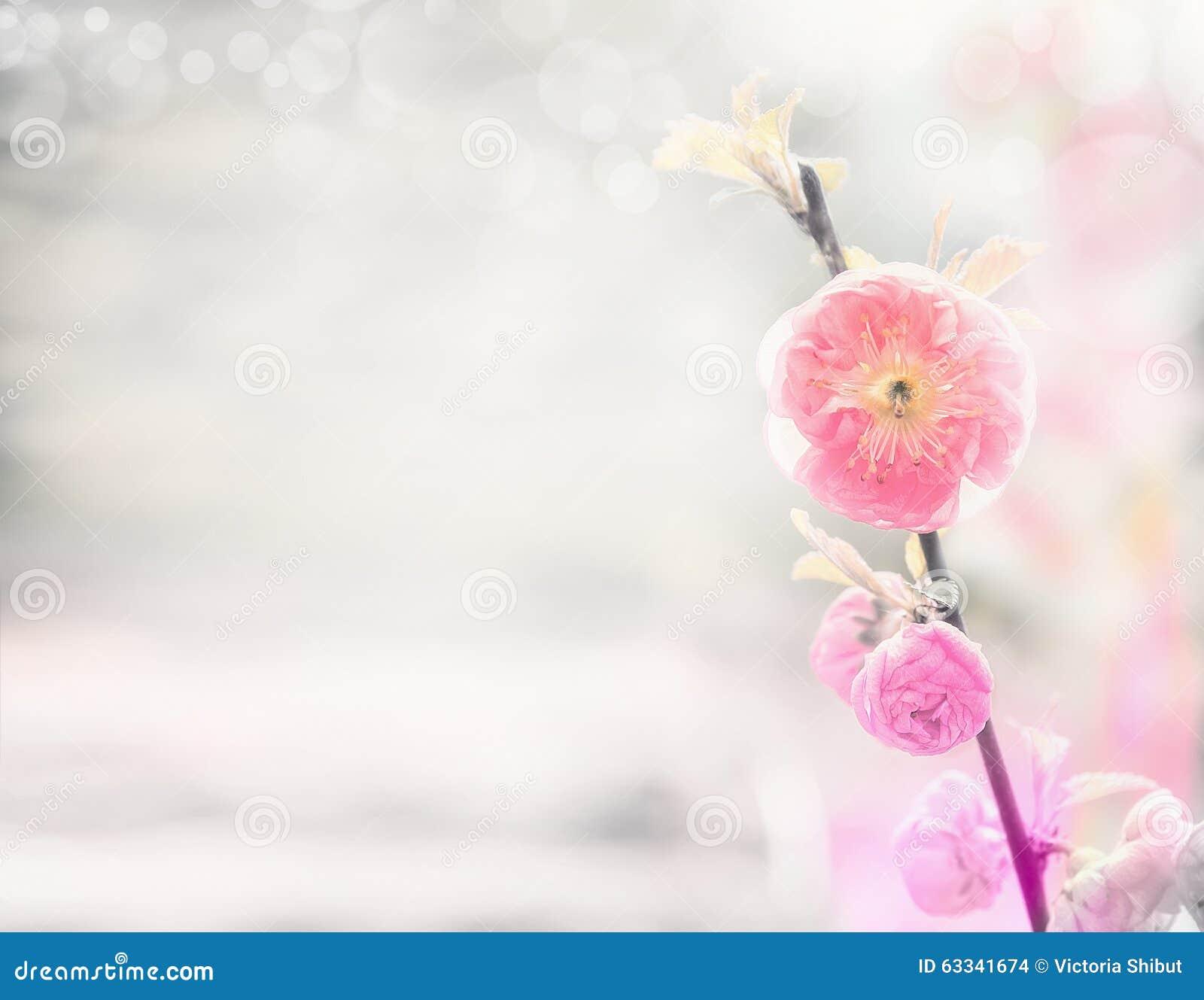 Υπόβαθρο φύσης άνοιξη με τα ρόδινα χλωμά λουλούδια αμυγδάλων