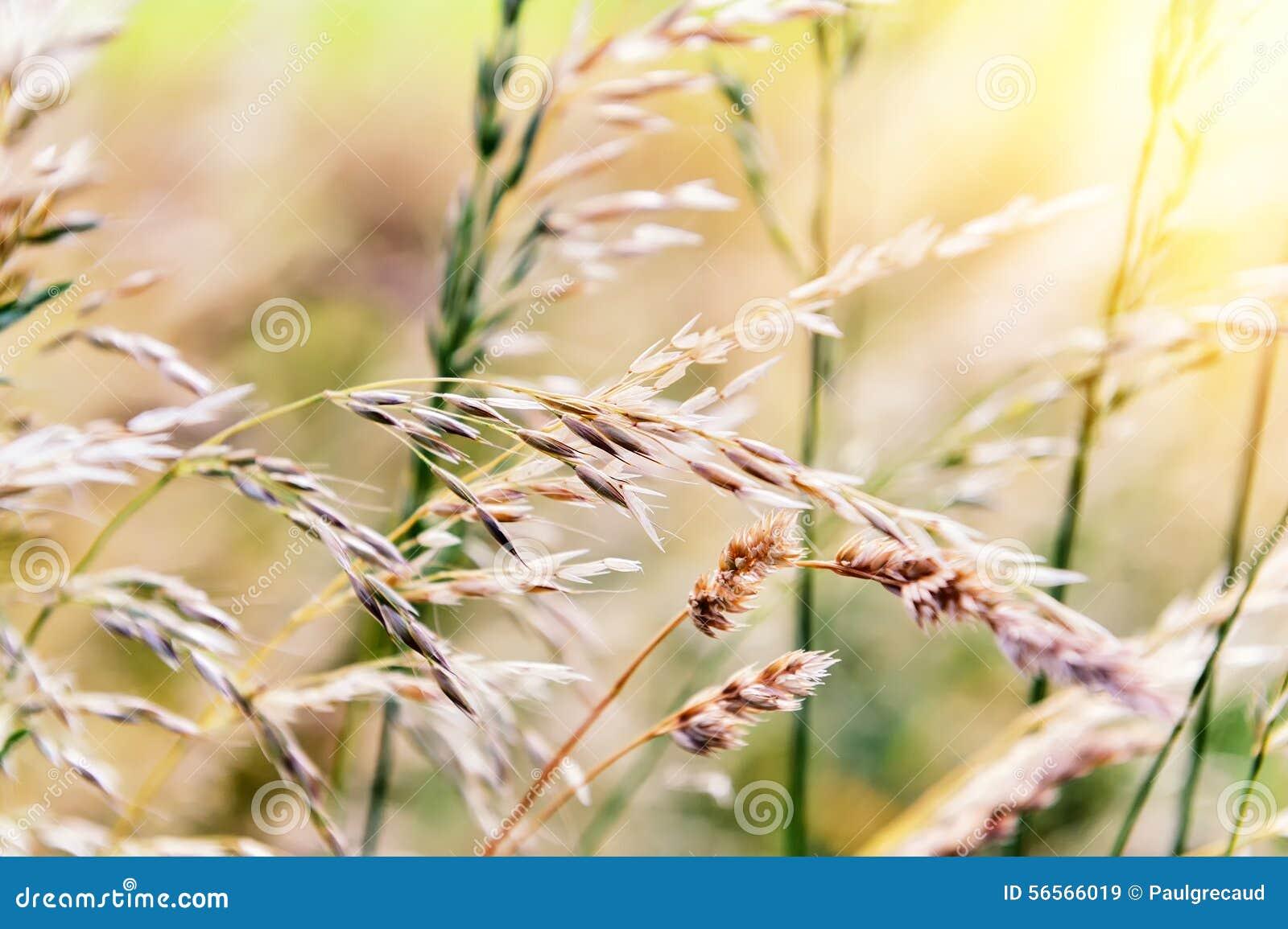 Download Υπόβαθρο φύσης με την άγρια χλόη Στοκ Εικόνα - εικόνα από περιβάλλον, φύλλο: 56566019