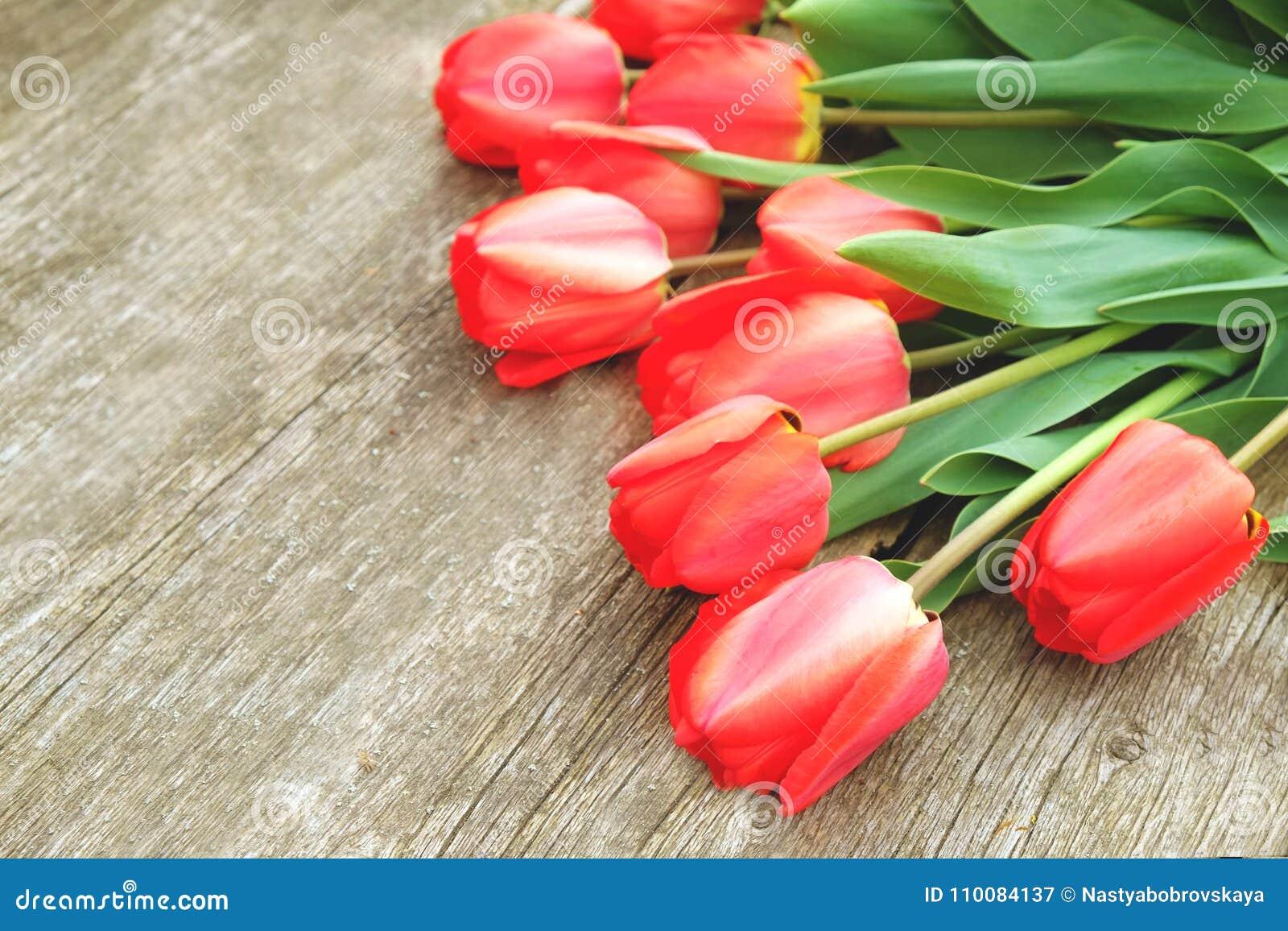 Υπόλοιπος κόσμος των φωτεινών πλούσιων κόκκινων λουλουδιών τουλιπών στο μίσχο Ξύλινο υπόβαθρο με το scopy διάστημα κειμένων Ευπρό