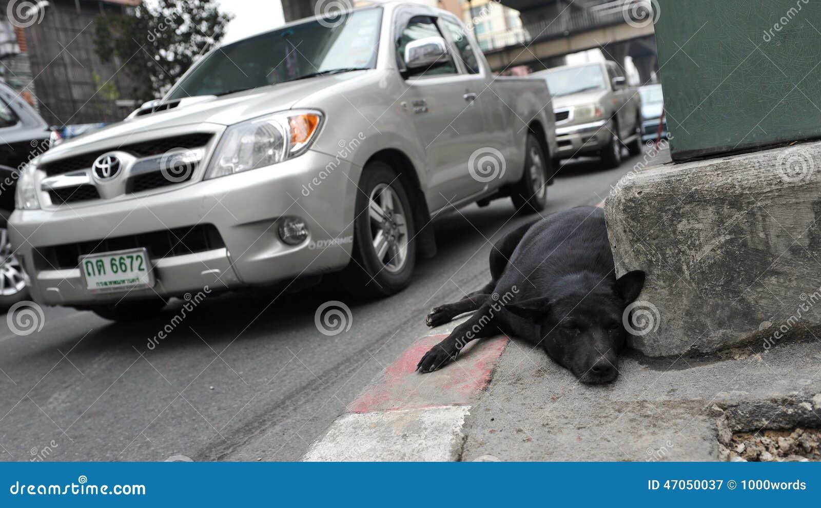 Υπόλοιπα περιπλανώμενων σκυλιών σε μια οδό πόλεων