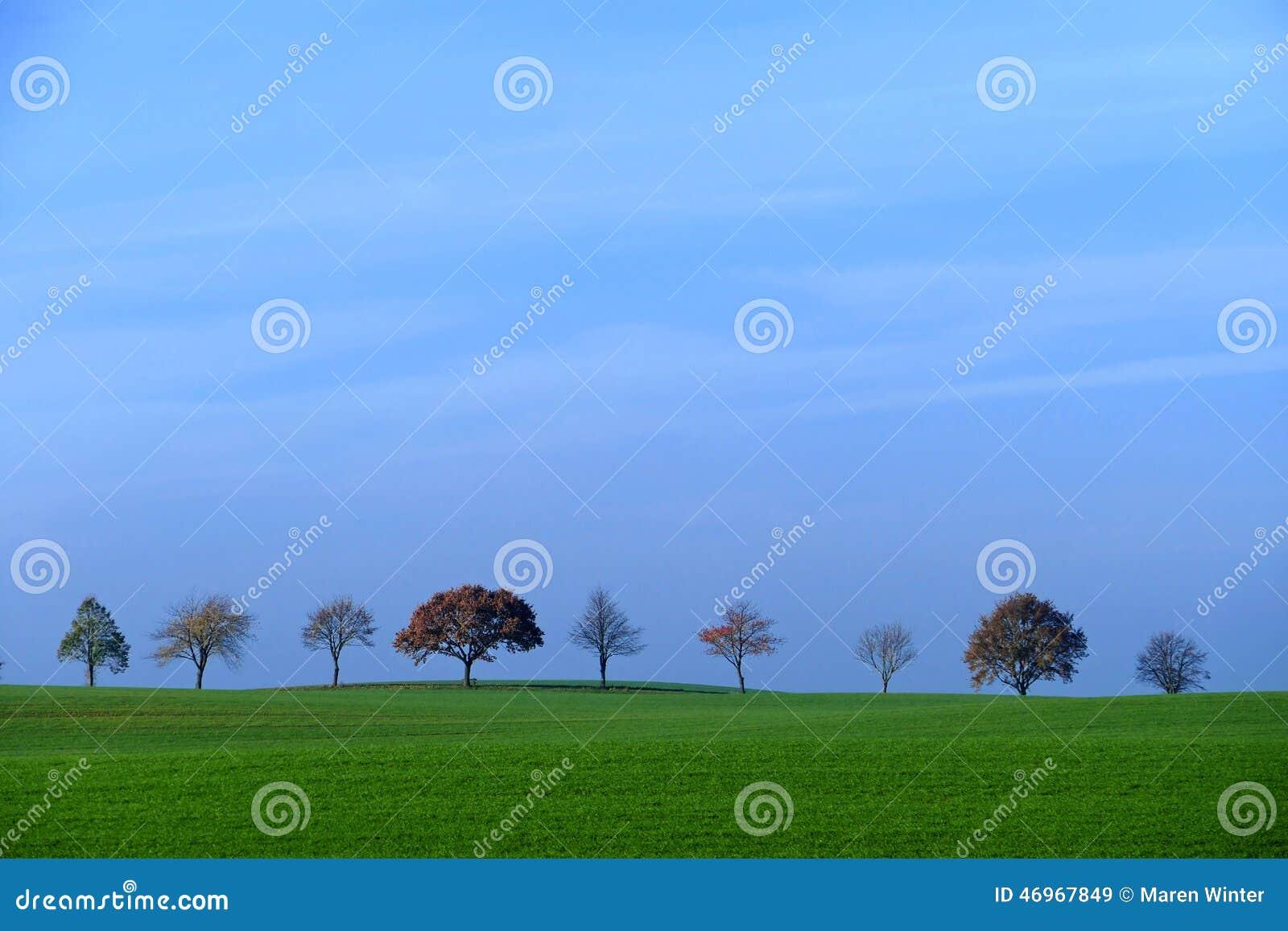 Υπόλοιπος κόσμος των δέντρων, τομέας με την πράσινη χλόη, μπλε ουρανός, διάστημα αντιγράφων