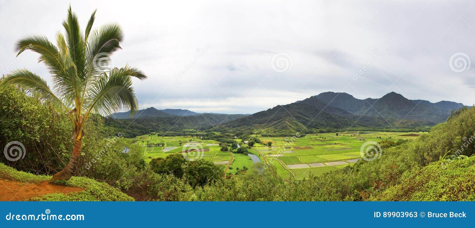 Υψηλή άποψη γωνίας Taro των τομέων