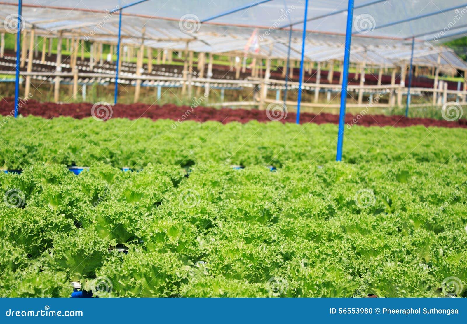 Download Υδροπονικό φυτικό αγρόκτημα Στοκ Εικόνες - εικόνα από highlands, σύγχρονος: 56553980